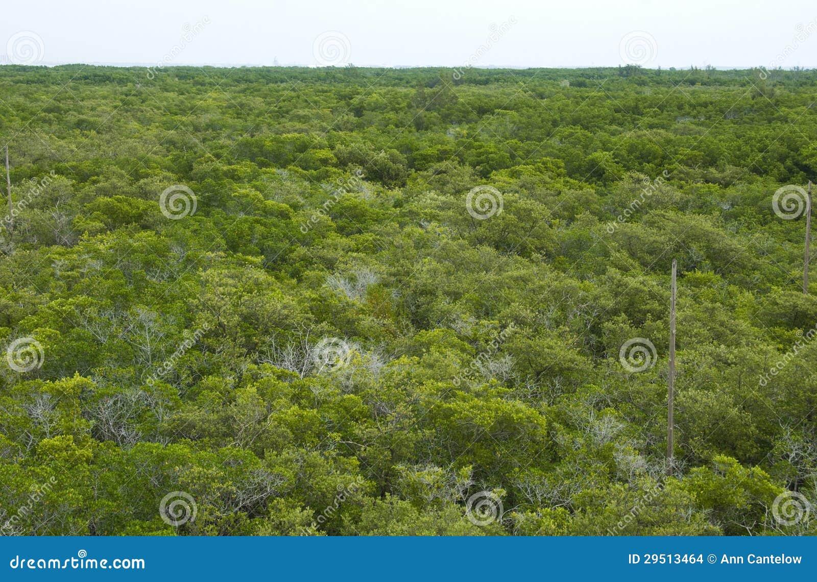 Het Bos van de mangrove van hierboven