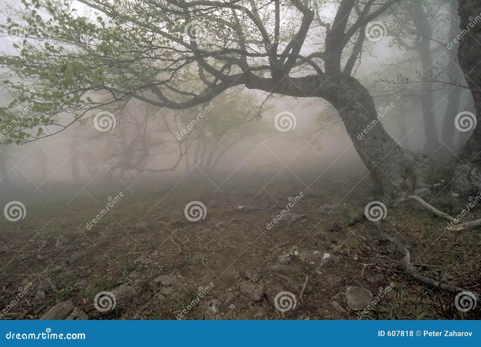 Het bos van de mist
