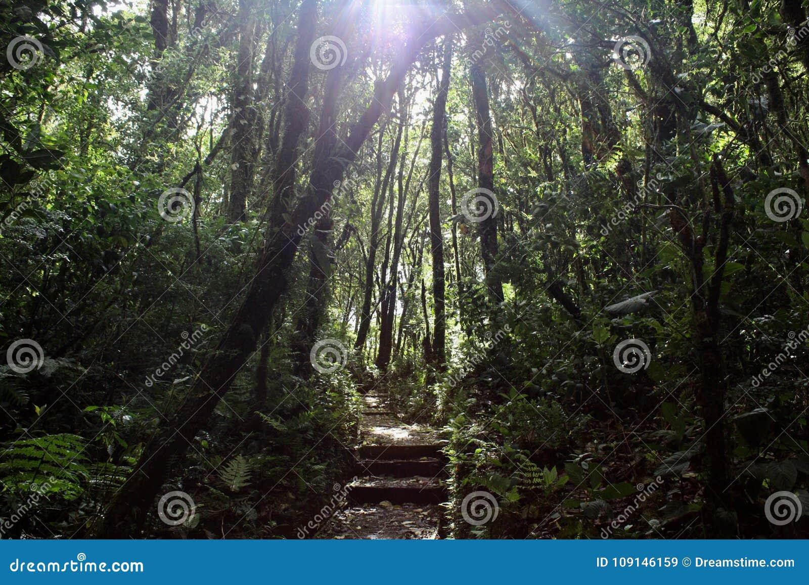 Het Bos van de Monteverdewolk