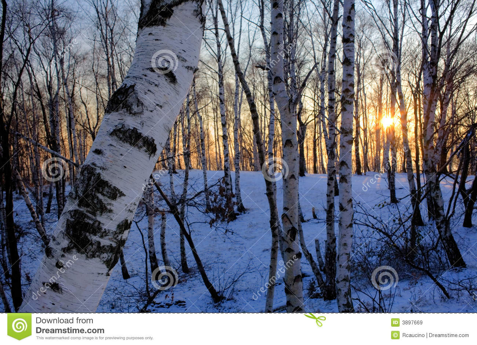 Het bos van de winter