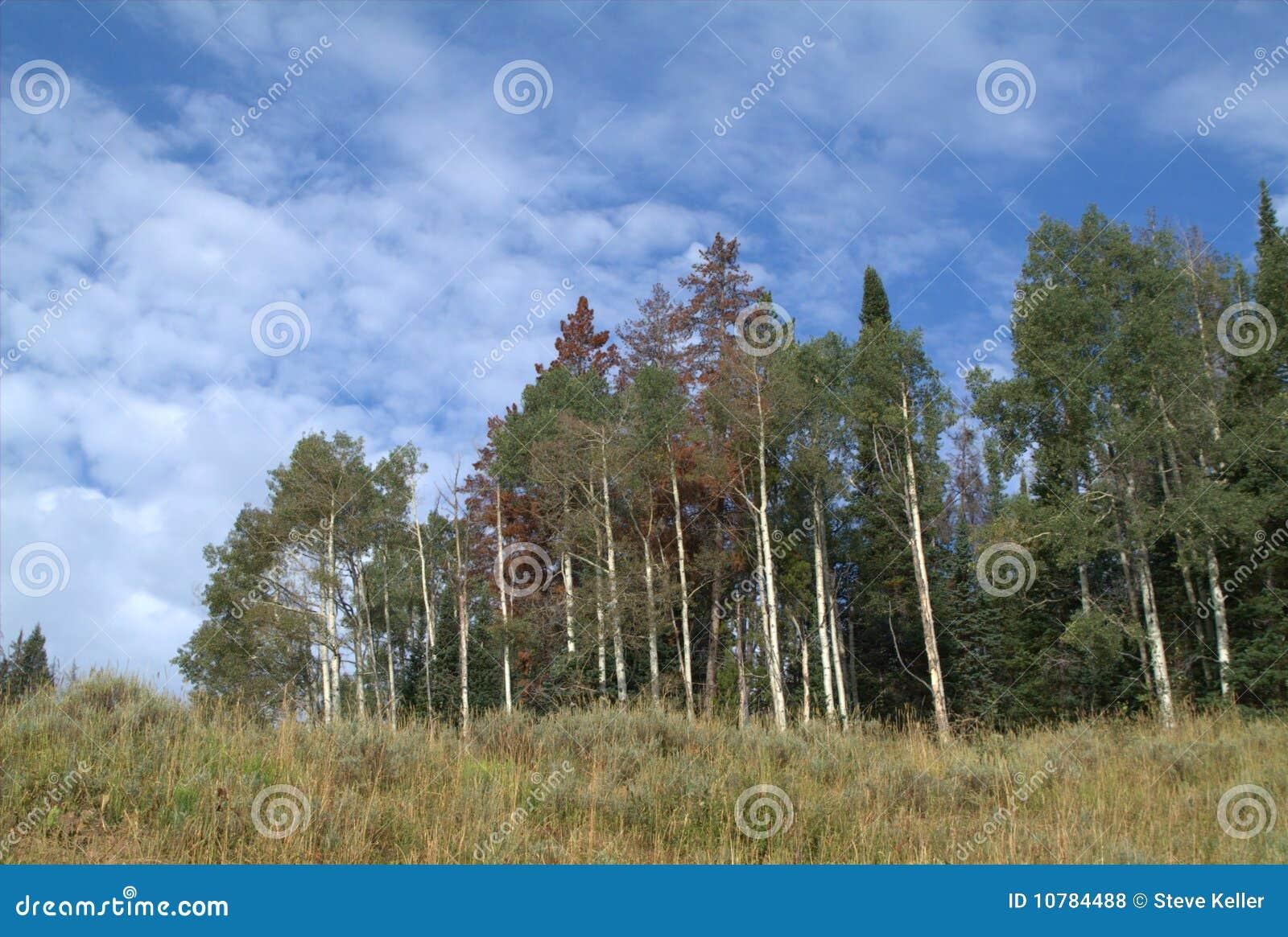 Het Bosje van de esp