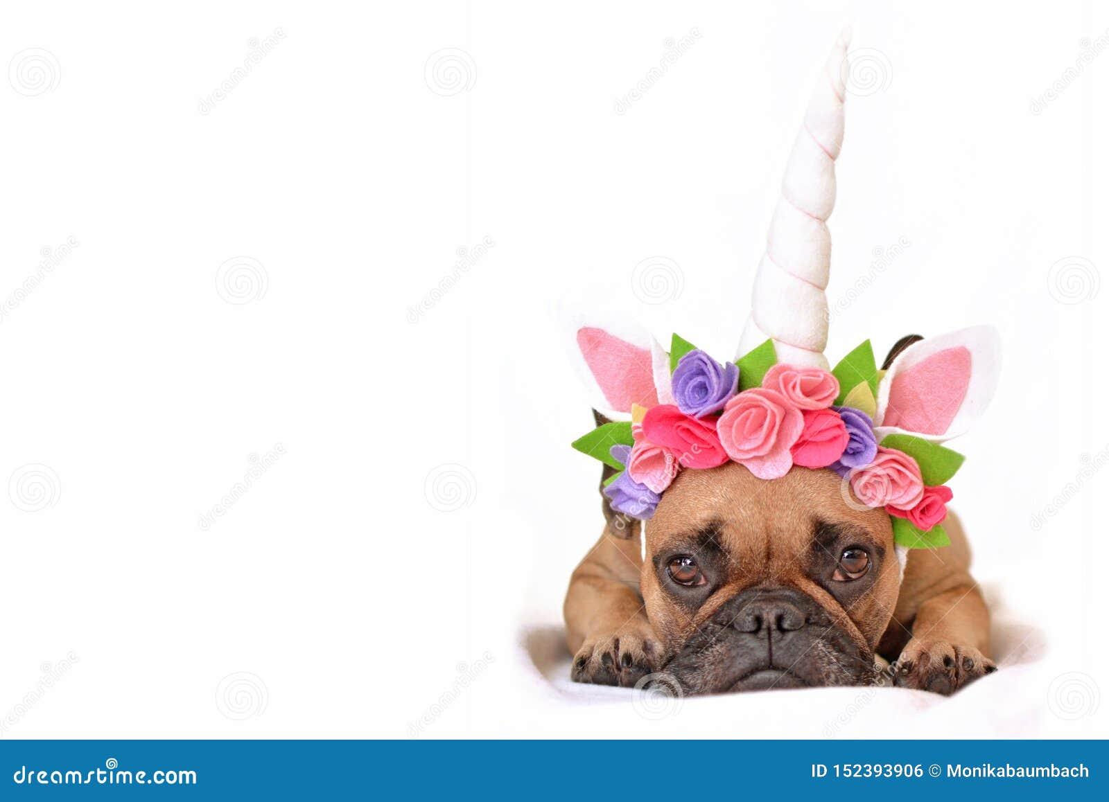 Het bruine Franse meisje van de Buldoghond kleedde zich omhoog met de mooie hoofdband van de eenhoornhoorn met bloemen liggend op