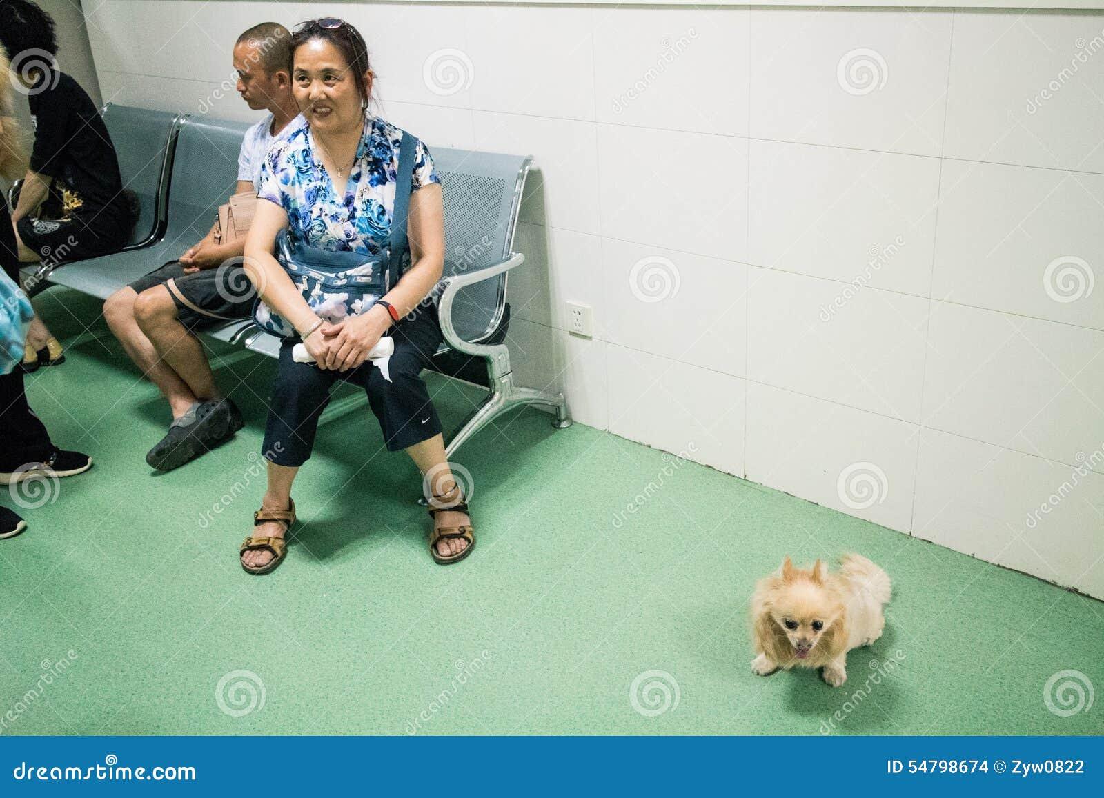 Het Chinese Huisdierenziekenhuis