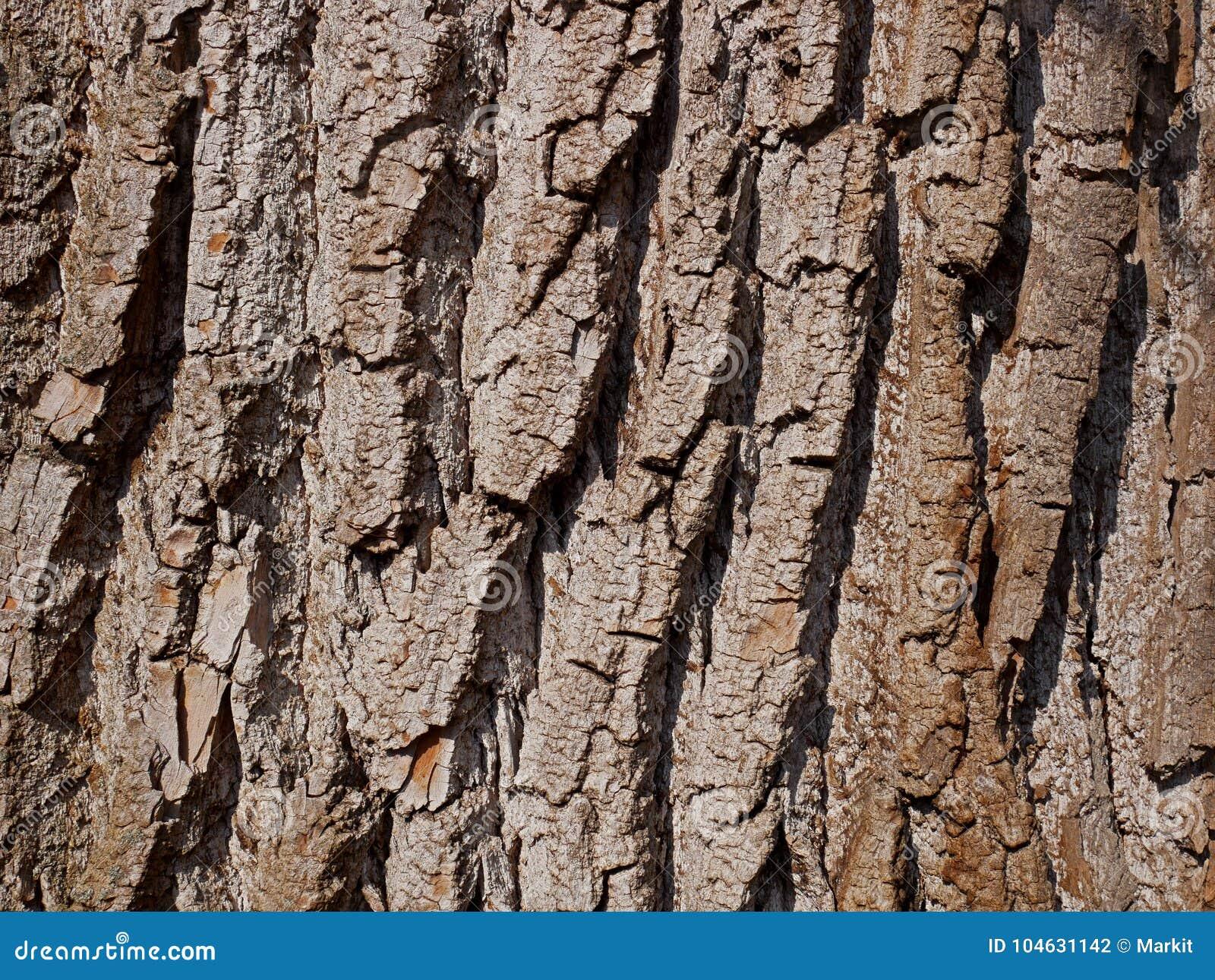 Download Het Close-up Van De Wilgenschors Stock Foto - Afbeelding bestaande uit geweven, stam: 104631142