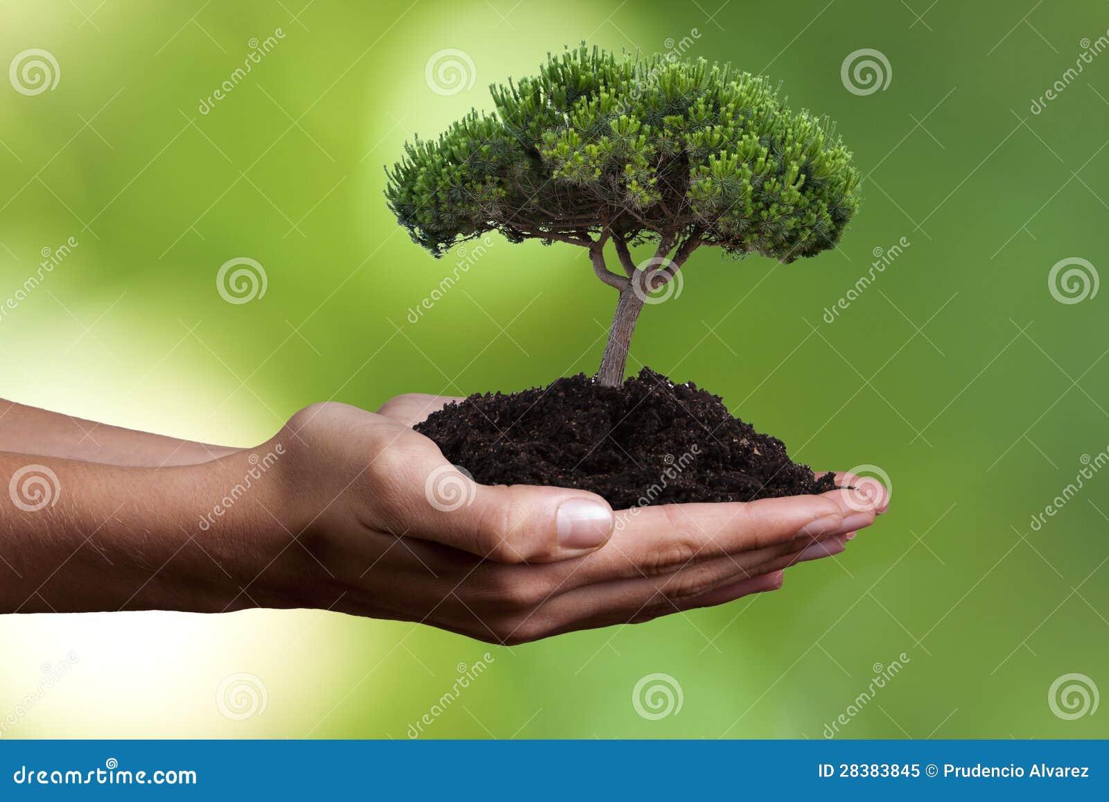 Het concept van de ecologie