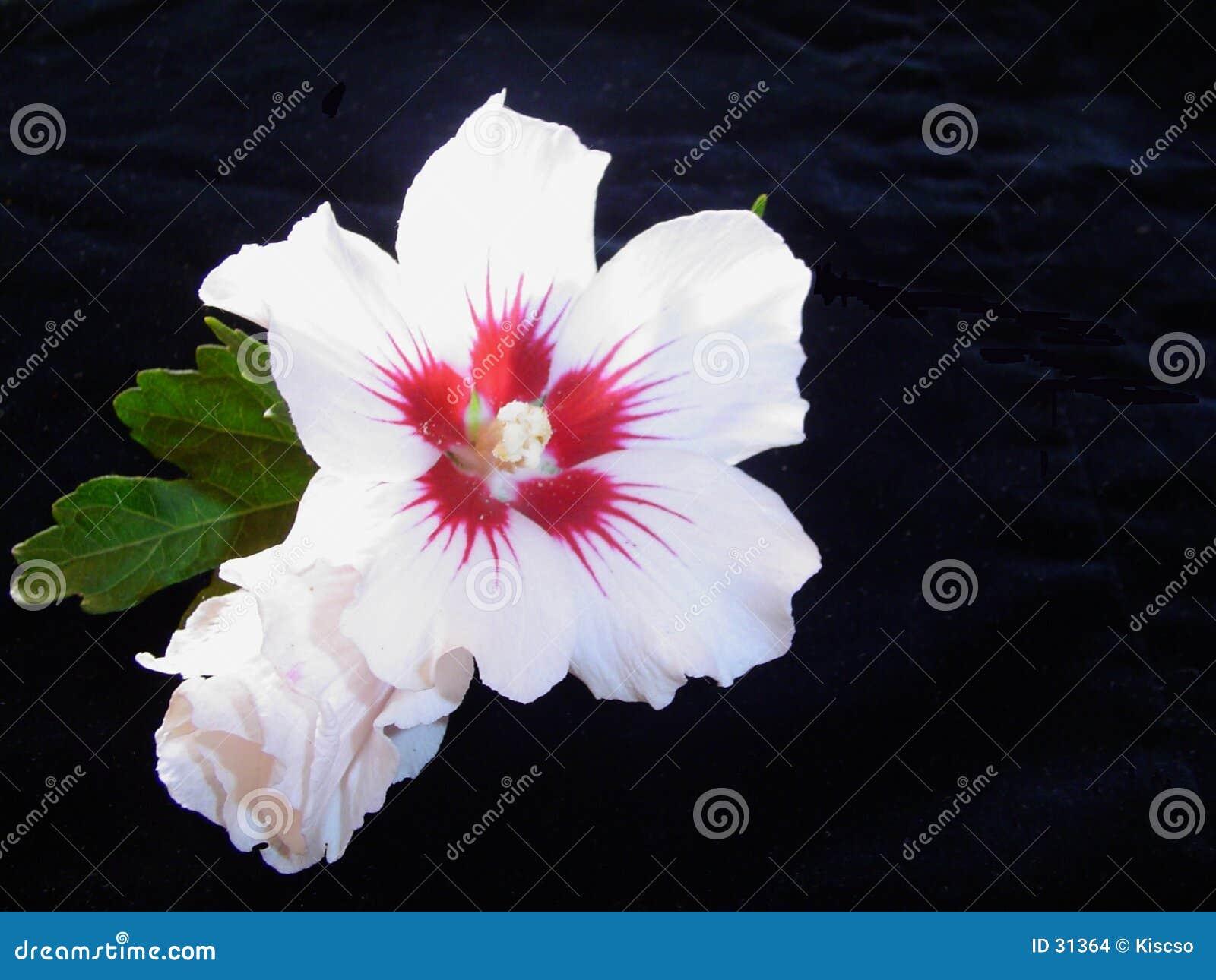 Het contrast van de bloem