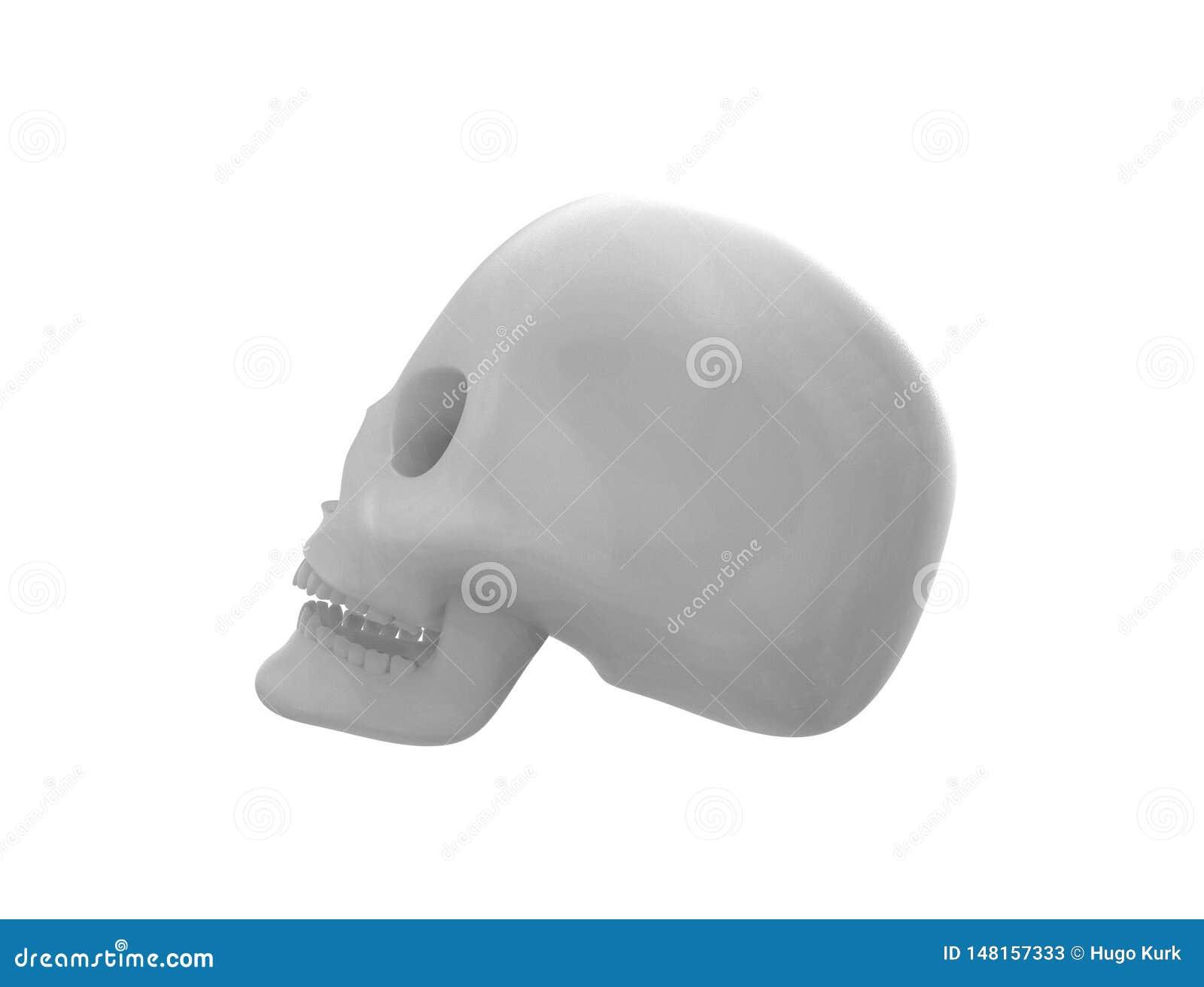 Het 3D teruggeven van een schedel op witte achtergrond wordt ge?soleerd die