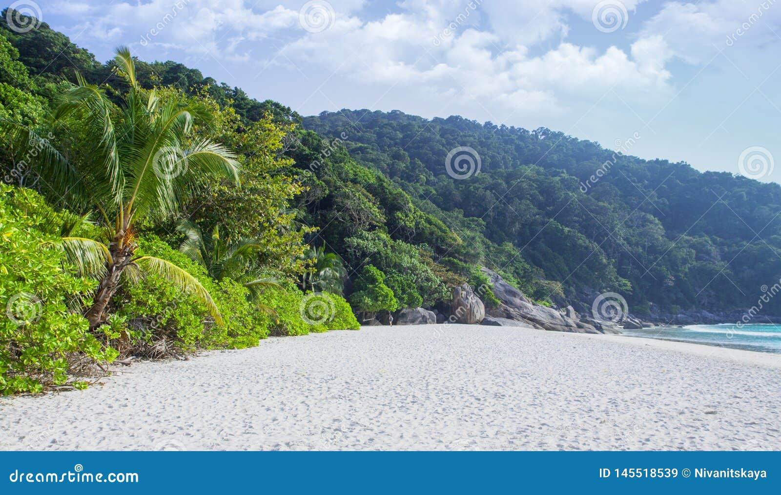 Het de groene wildernis en strand van Paradise keerkringen Zandkust, blauwe lagune en vele installaties