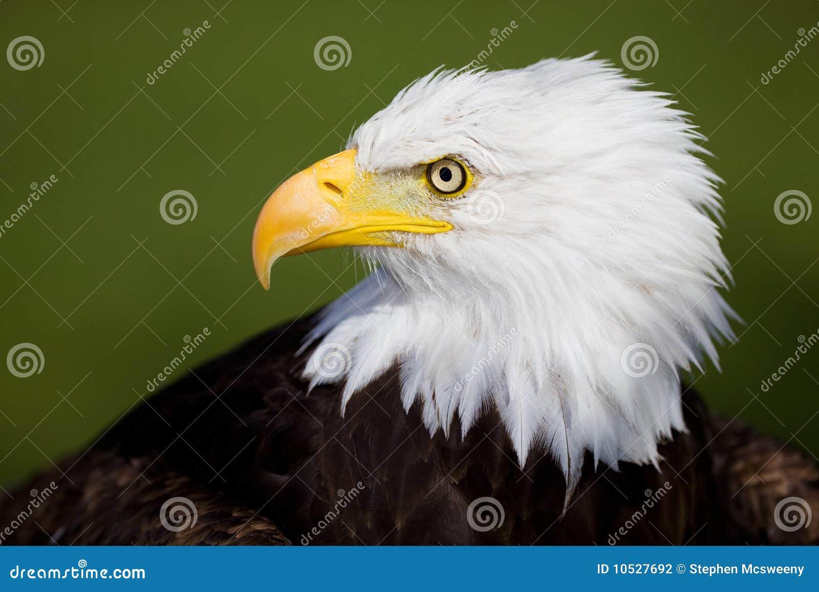 Het detail van de adelaar