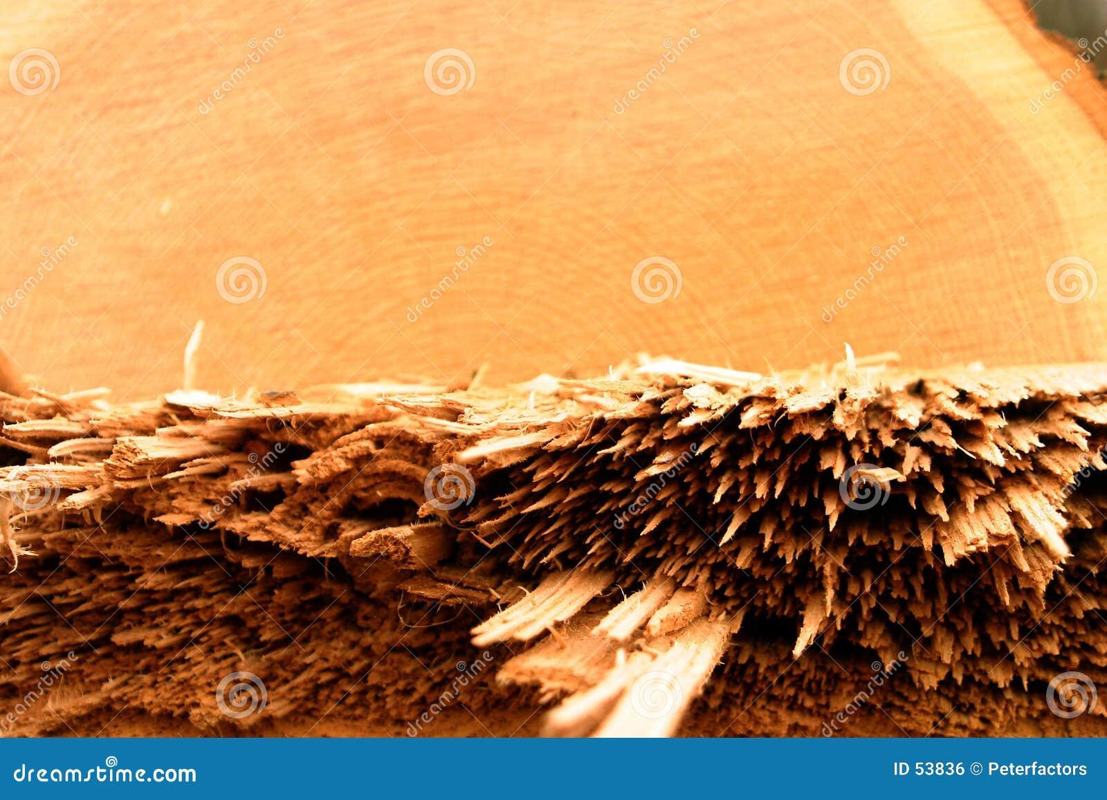 Het detail van de verslagen eiken boom