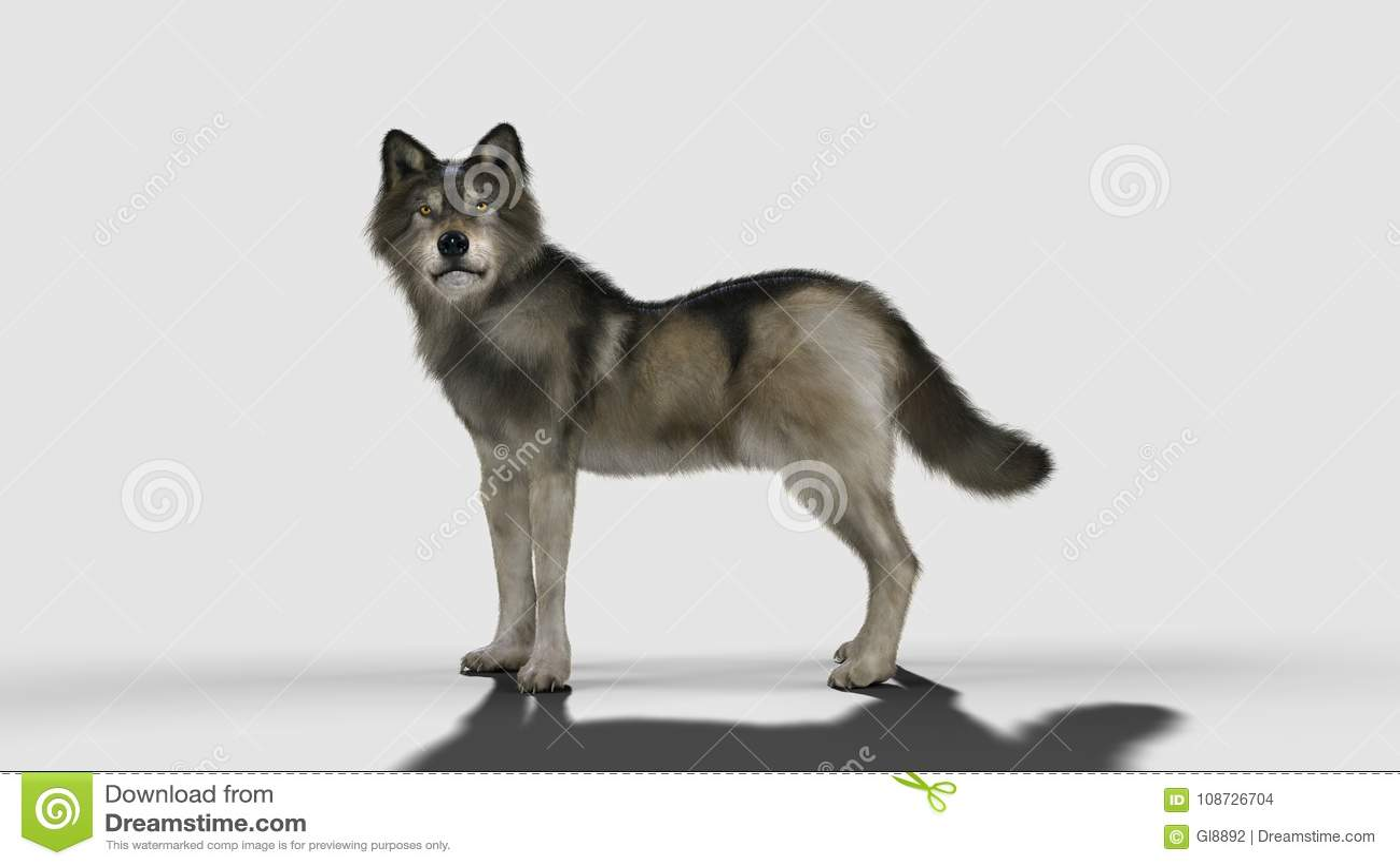 het dier de gevaarswolf bruine en grijze wolf stock