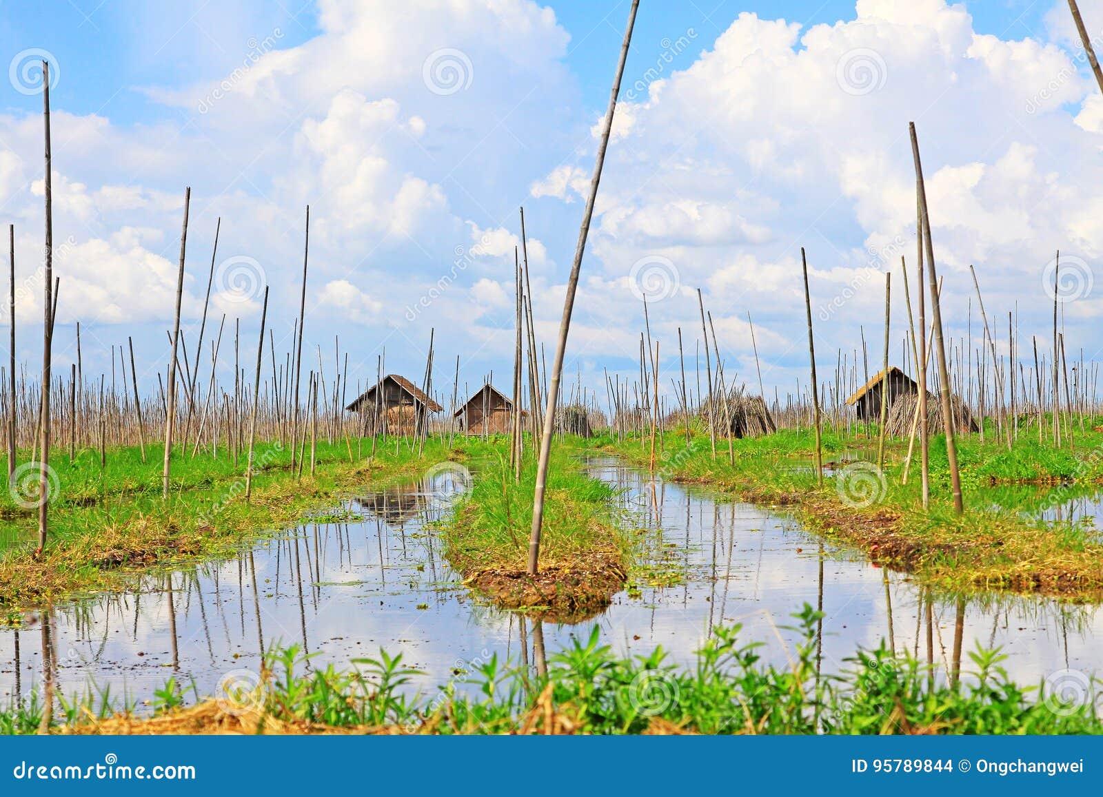 Het Drijvende Landbouwbedrijf van het Inlemeer, Myanmar