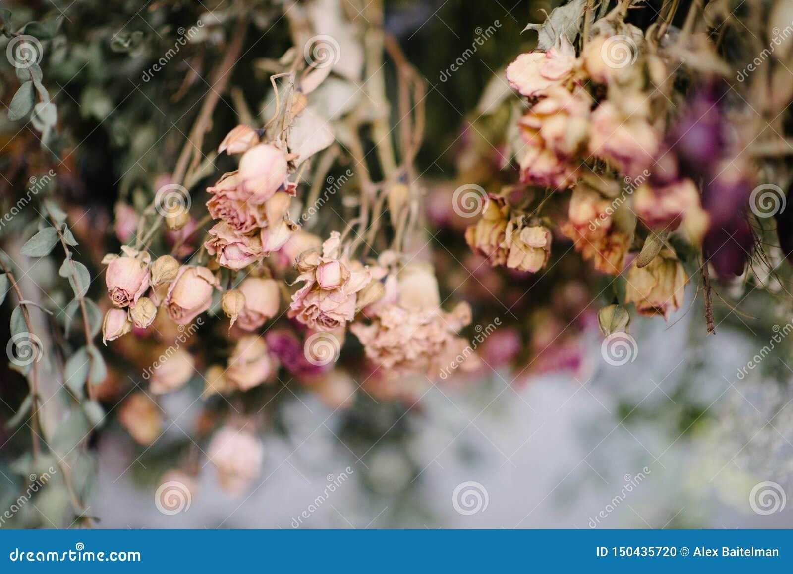 Het droge herbarium van bloemen sluit omhoog Het herbarium van bloemen sluit omhoog