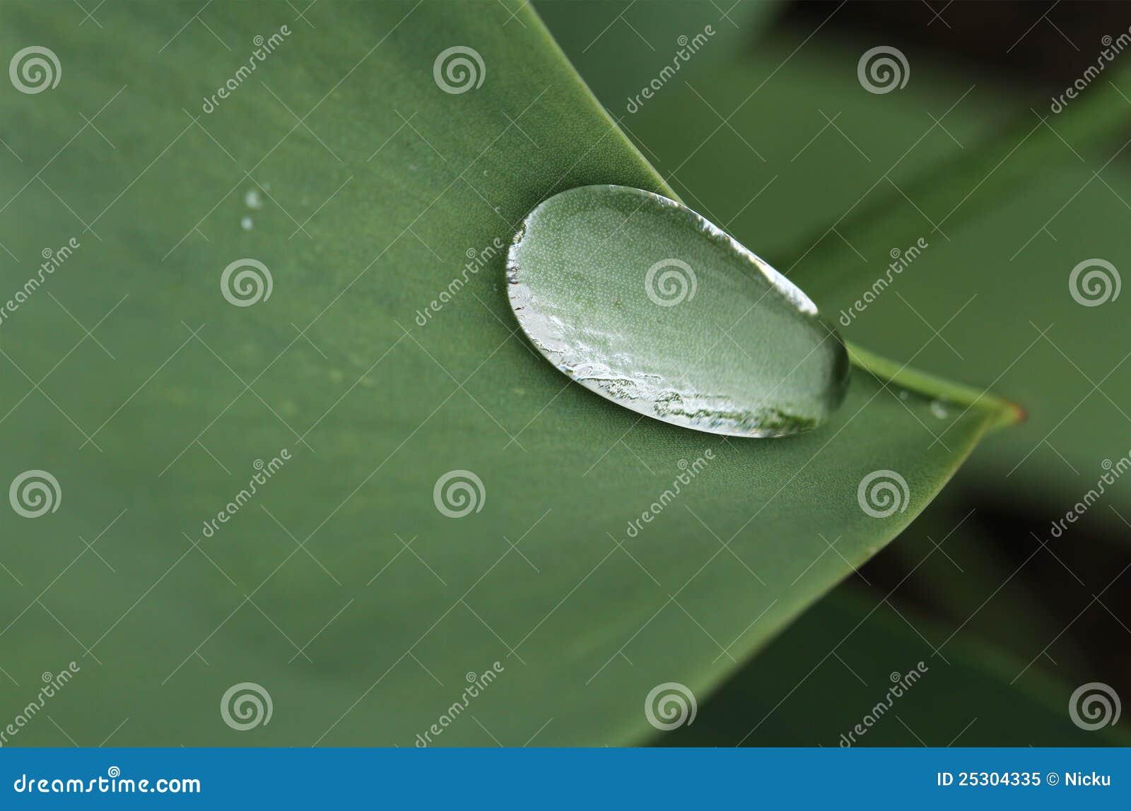 Het druppeltje van het water op een groene bladrand stock afbeelding afbeelding 25304335 - Groen behang van het water ...