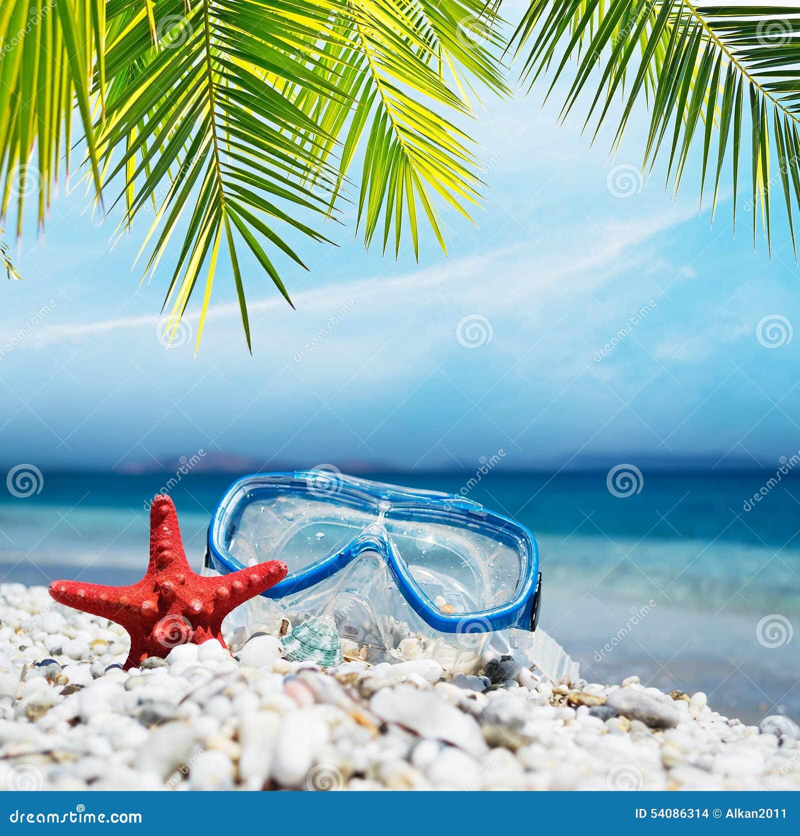 Het duiken masker onder de palm