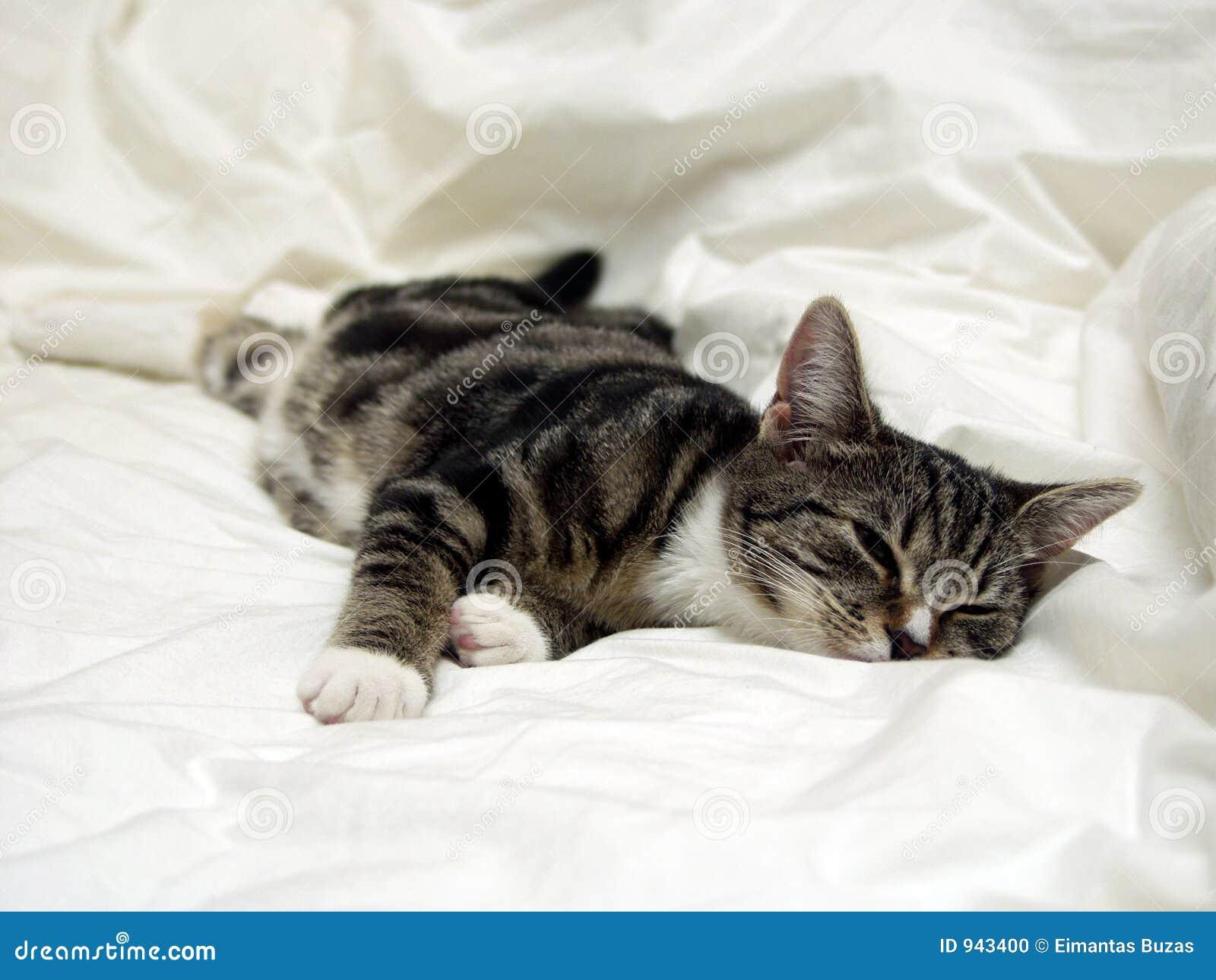 Het Dutje van de kat