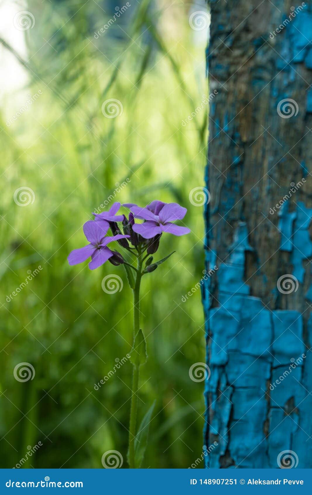 Het eenzame bloem groeien in de schaduw dichtbij de sjofele omheining dicht omhoog