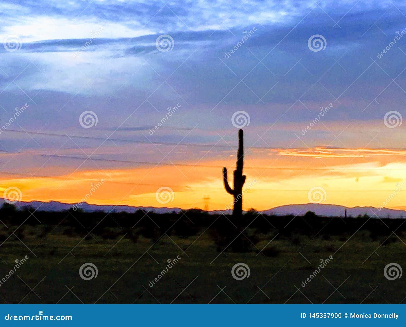 Het eenzame oranje Blauw van de cactuszonsondergang
