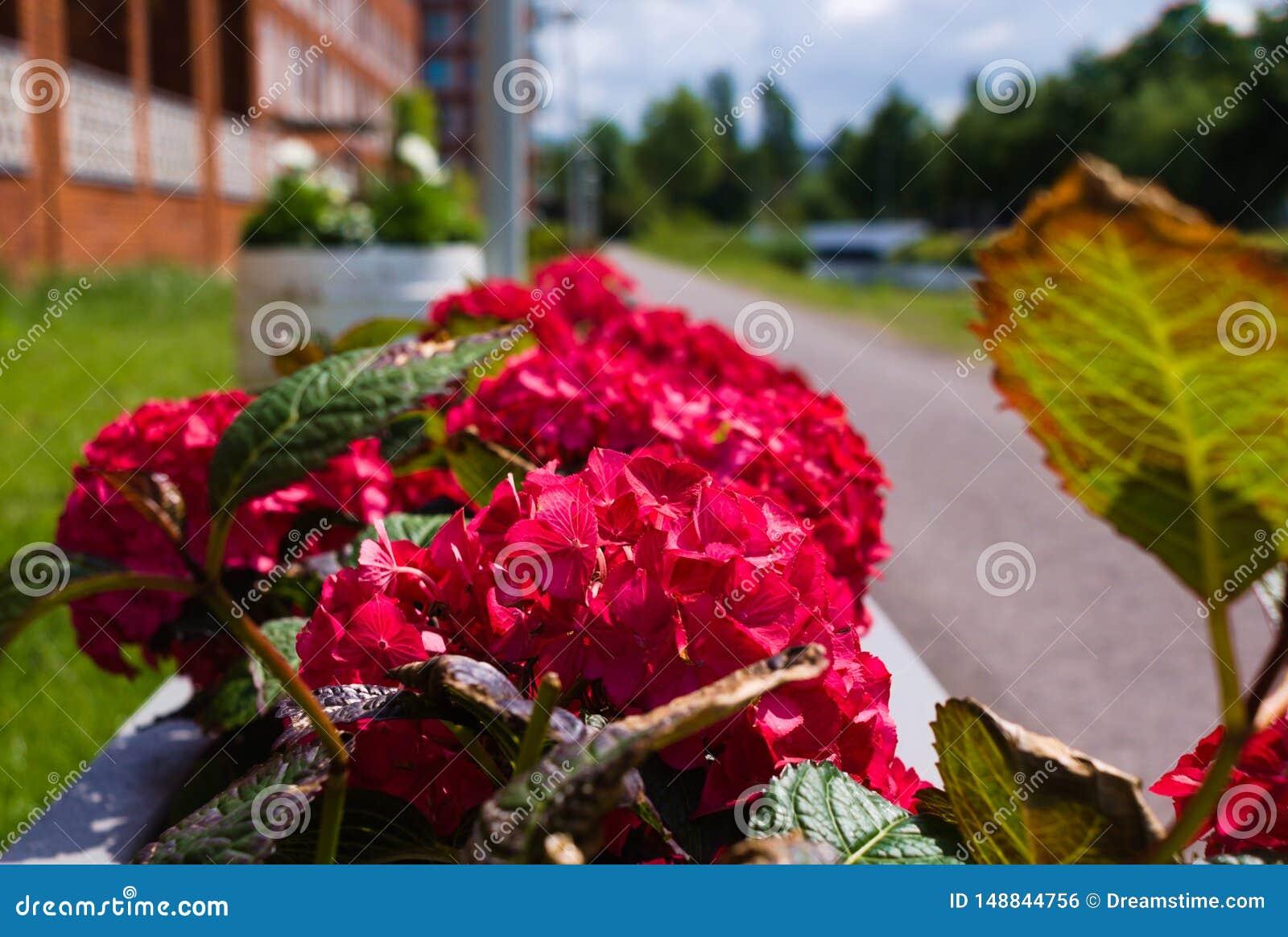 Het eerste bloeien van bloemen in de zomer