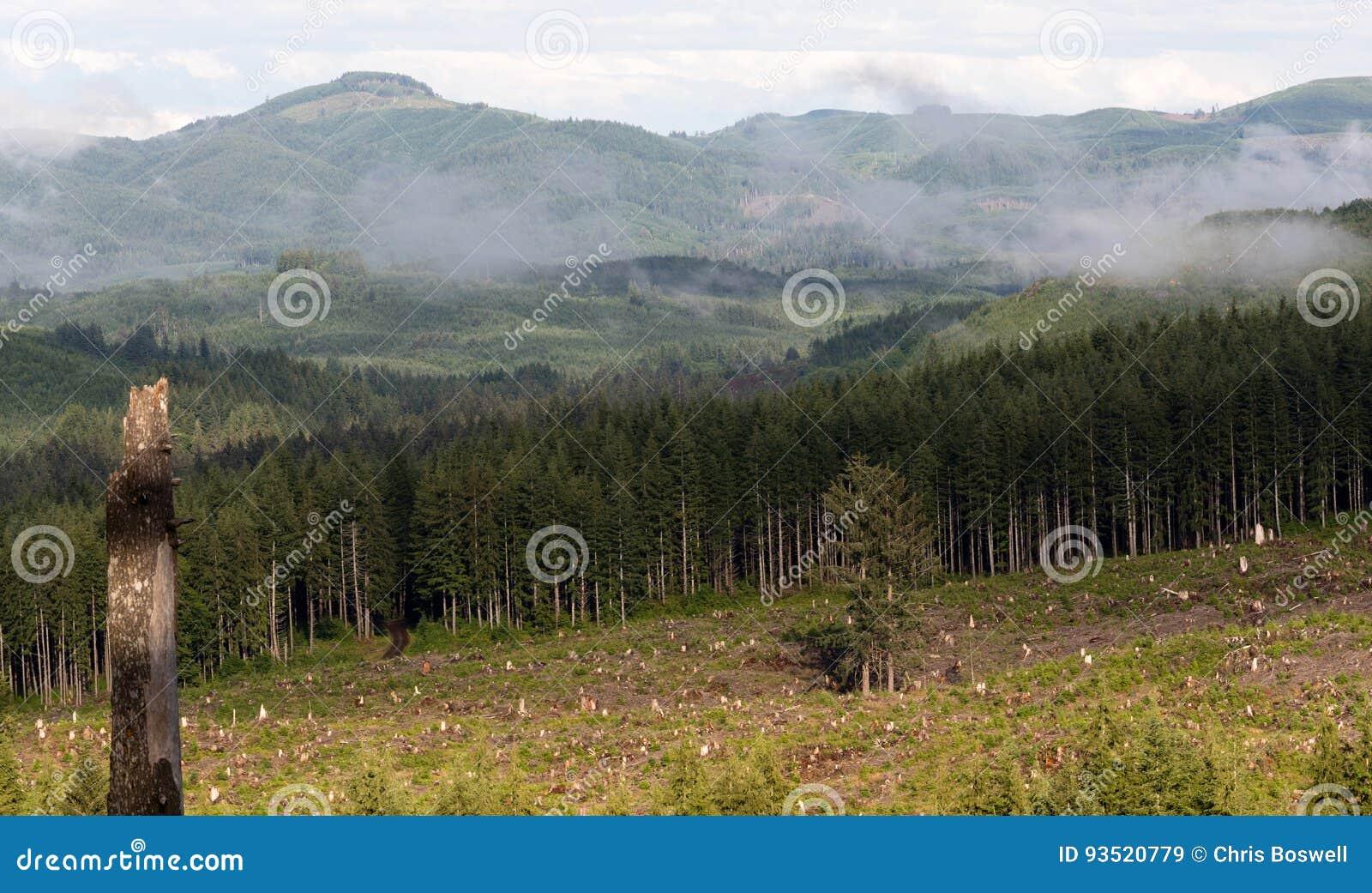 Het Effect van het mistige Berg de Duidelijke Registreren Ontbossing van Boomstompen