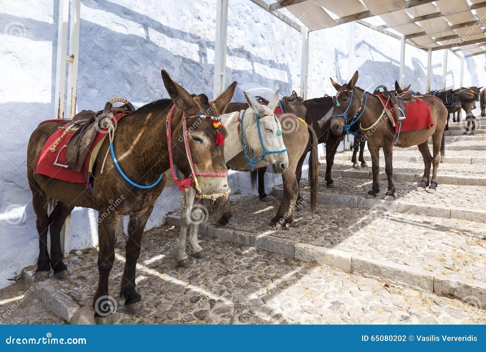 Het eiland van Griekenland Santorini in de ezels van Cycladen van de eilanden is u