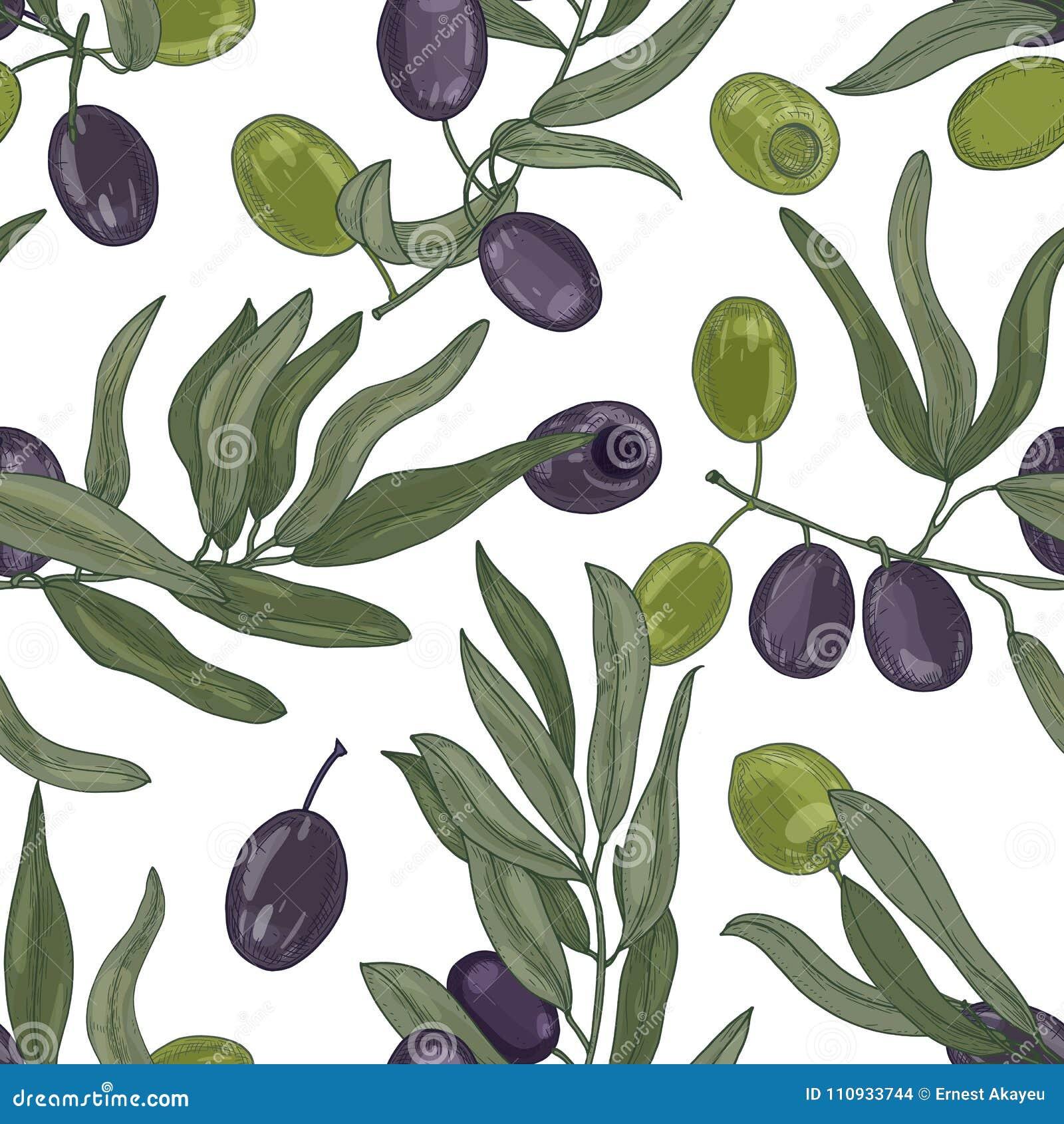 Het elegante botanische naadloze patroon met olijfboom vertakt zich met bladeren, zwarte en groene rijpe vruchten of steenvruchte