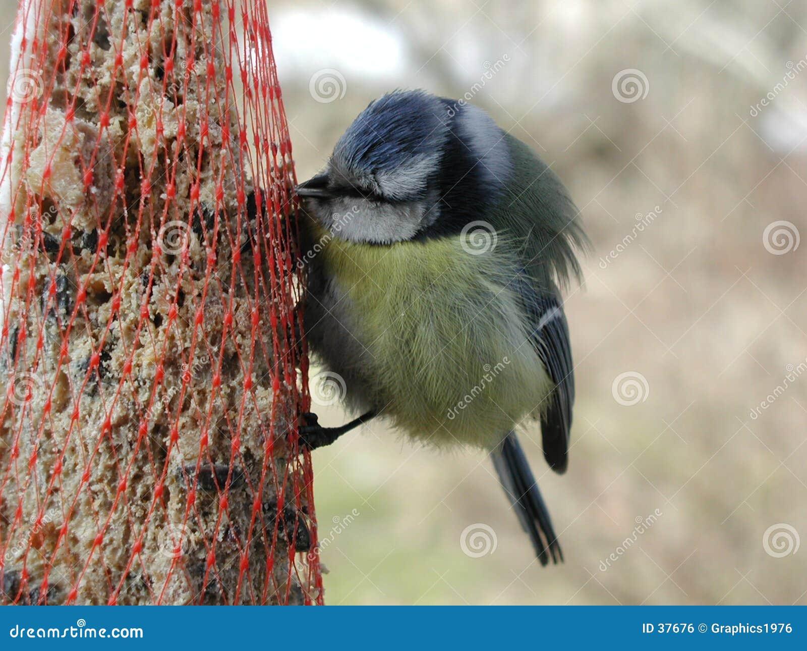 Het eten van de vogel