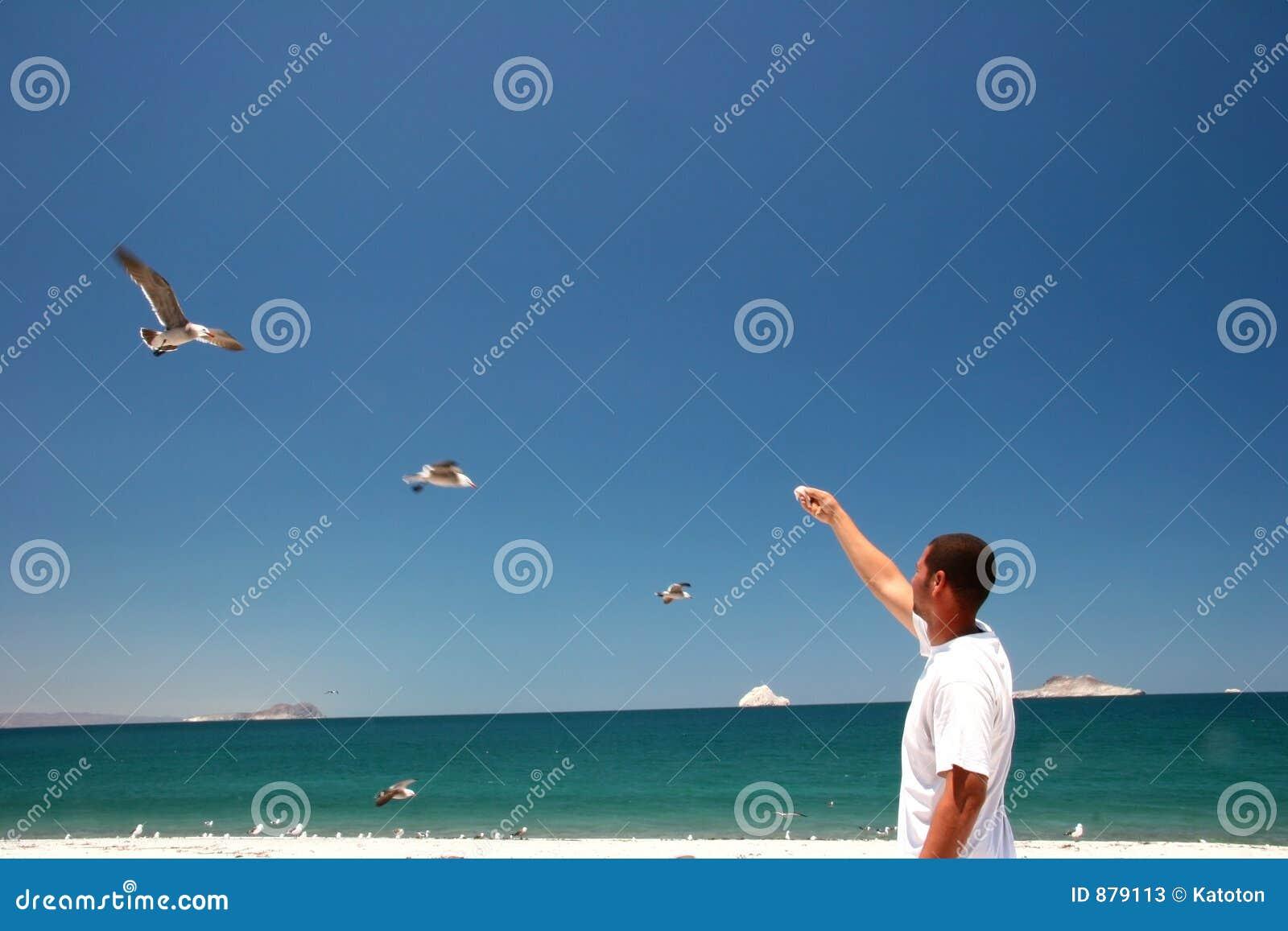 Het eten van zeemeeuwen