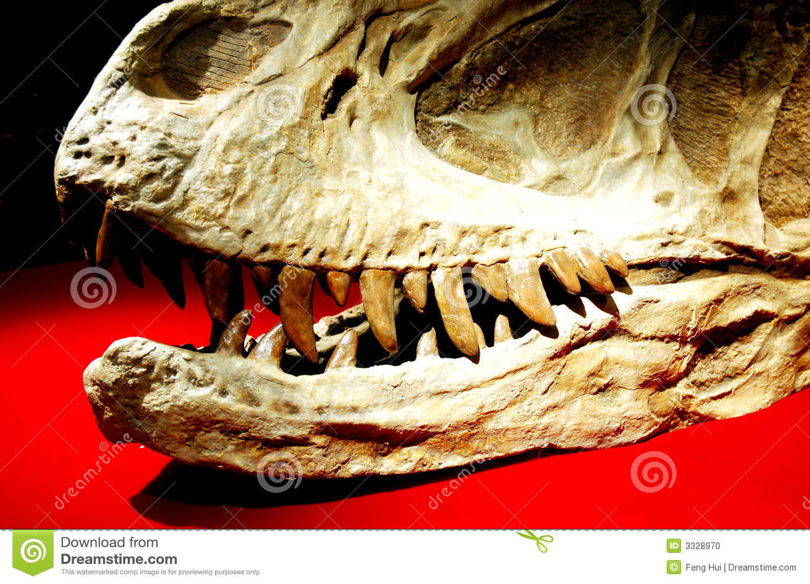 Het fossiel van de dinosaurus