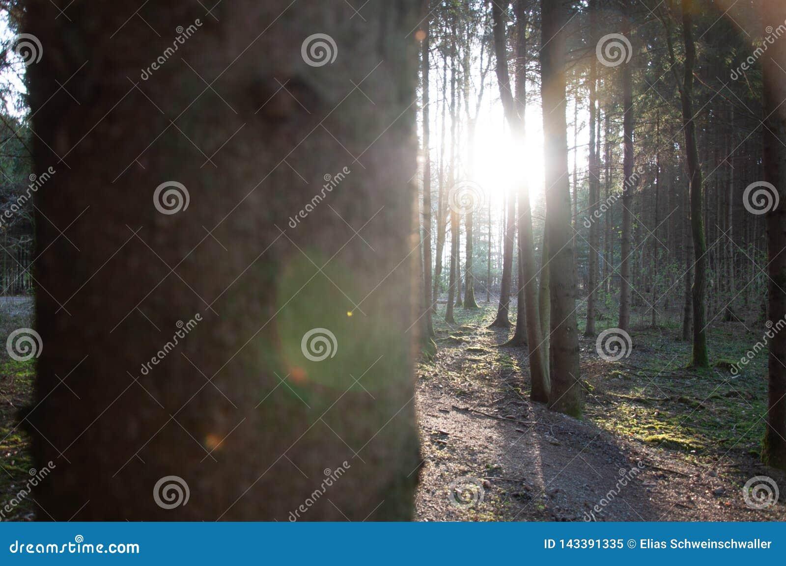 Het fotograferen van zon achter vele bomen