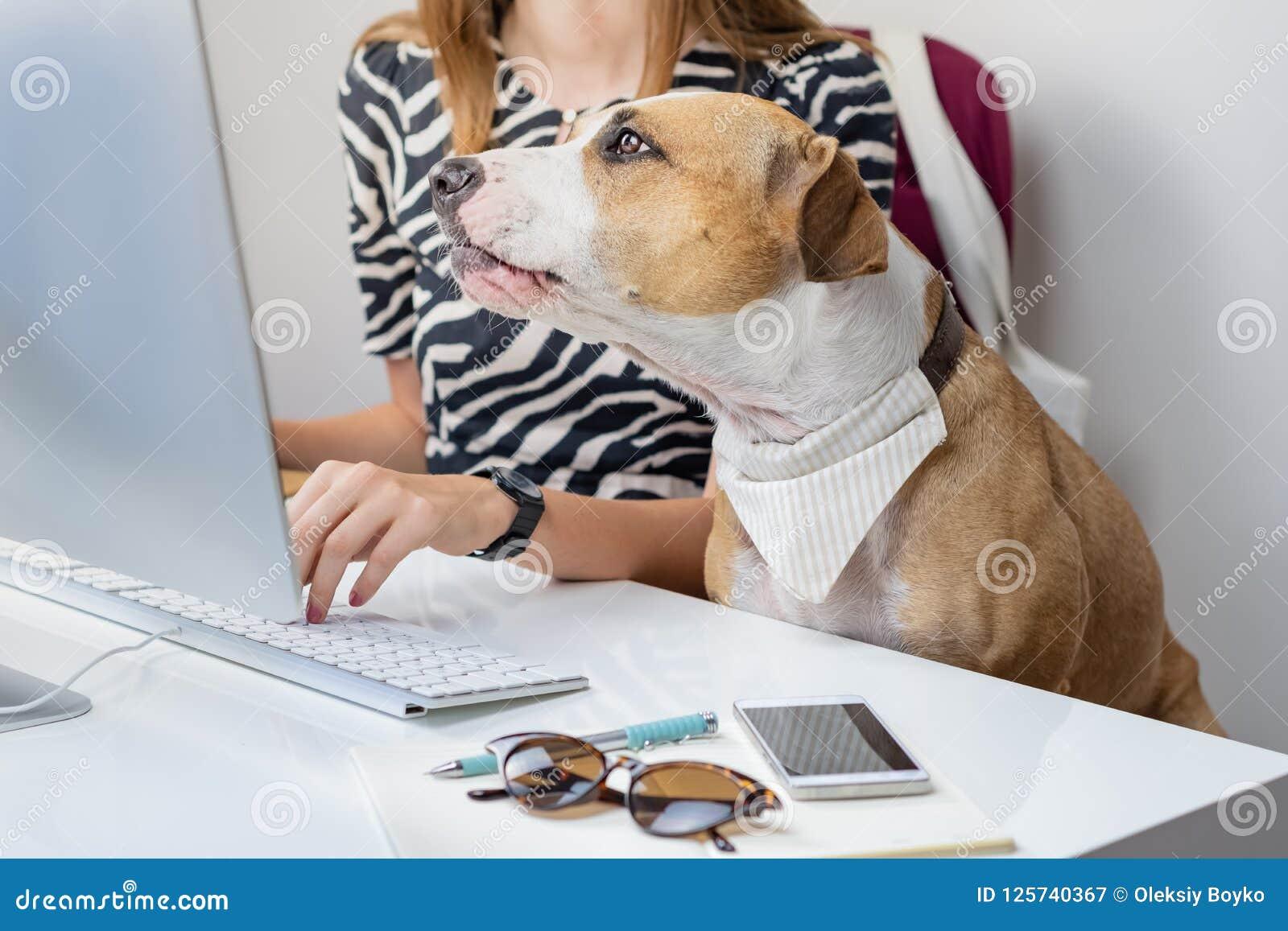 Het gaan met huisdierenconcept werken: leuke hond met vrouwelijke eigenaar in F