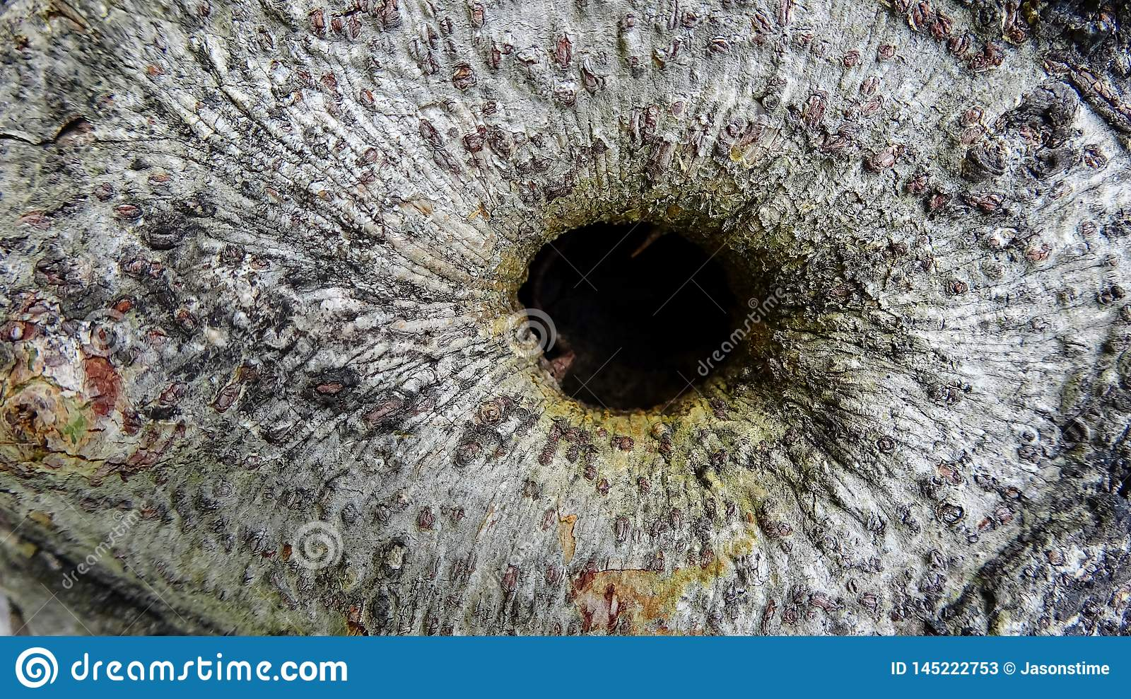 Het gaten van de achtergrond textuurboom illustratie