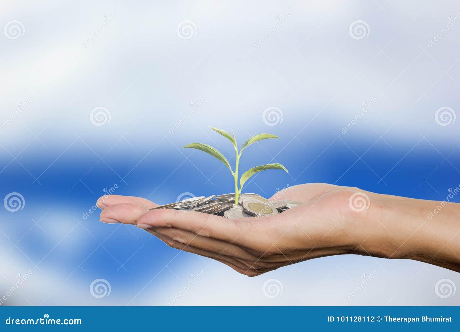 Het gebaar van de mensenhand stelt de muntstukken van de holdingsstapel op palm met jong boompje op de achtergrond van de wolkenh