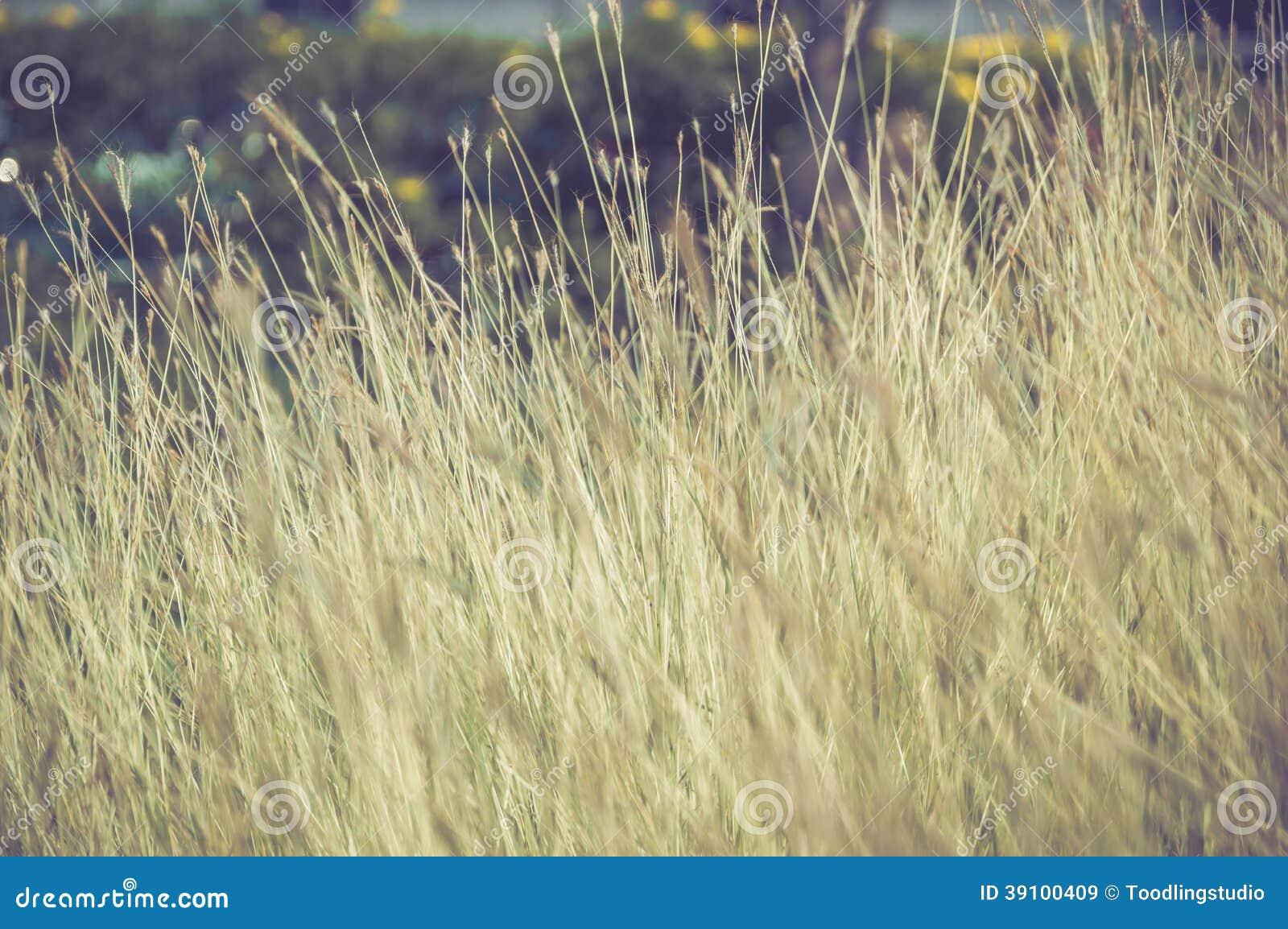 Het gebied van de grasbloem in de aard