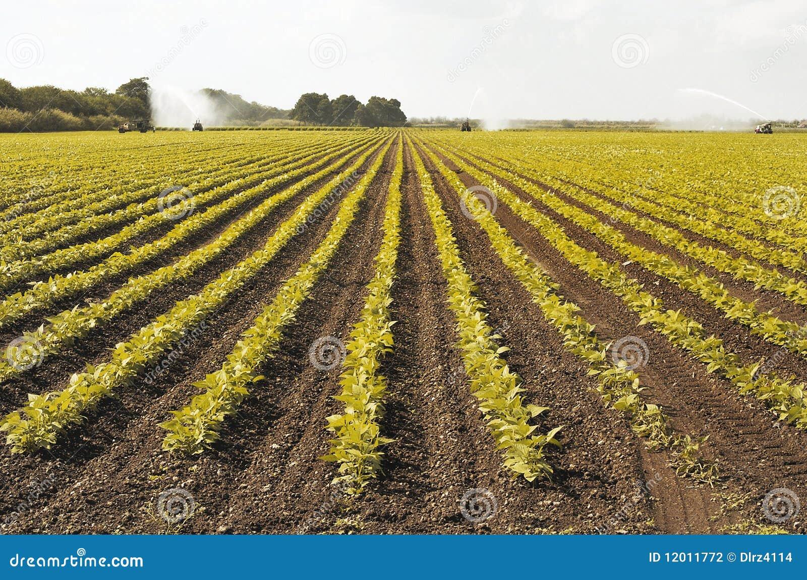 Het Gebied van de irrigatie