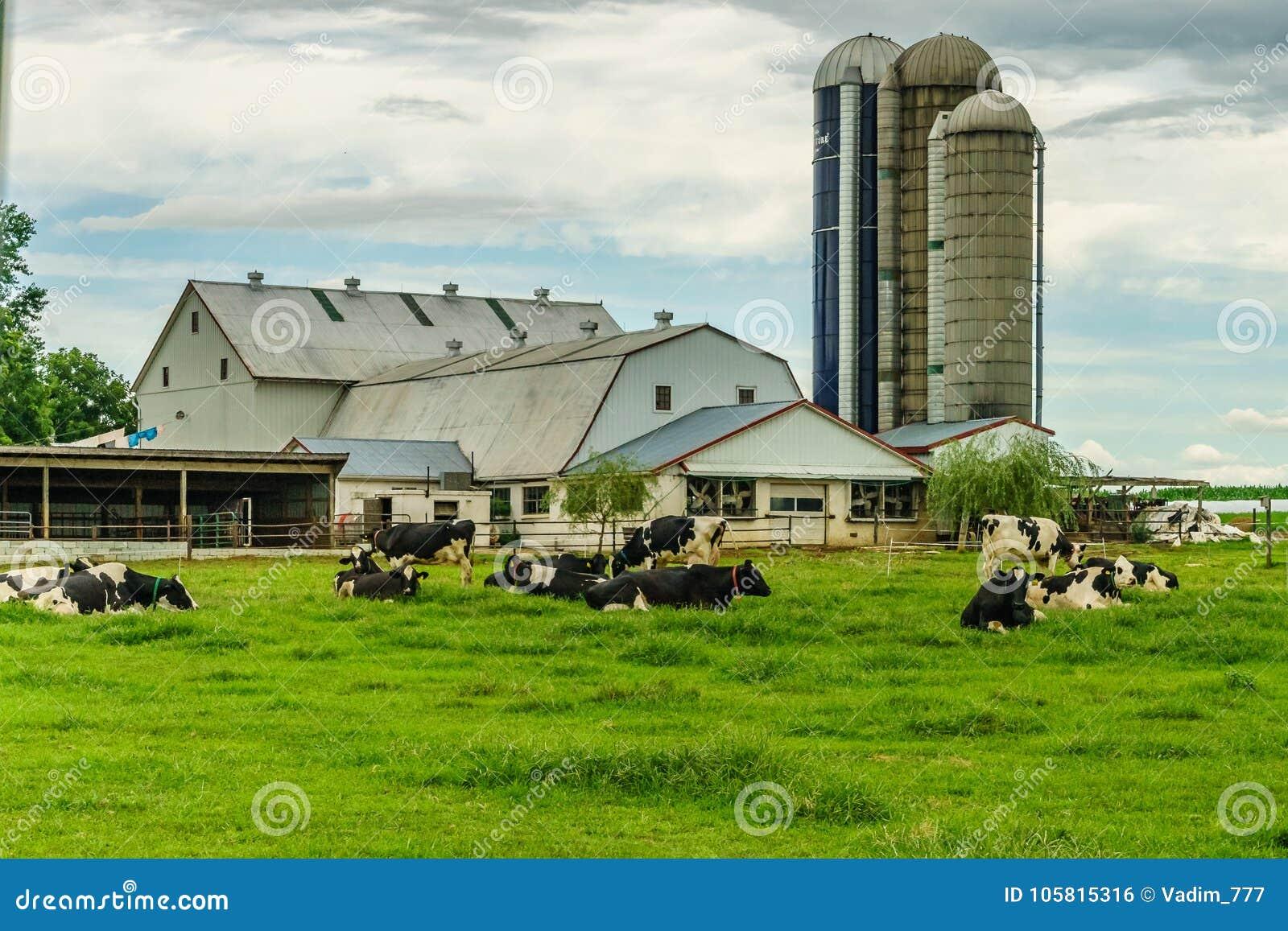 Het gebied van de het landbouwbedrijfschuur van het Amishland landbouw en het weiden koeien in Lancaster, PA
