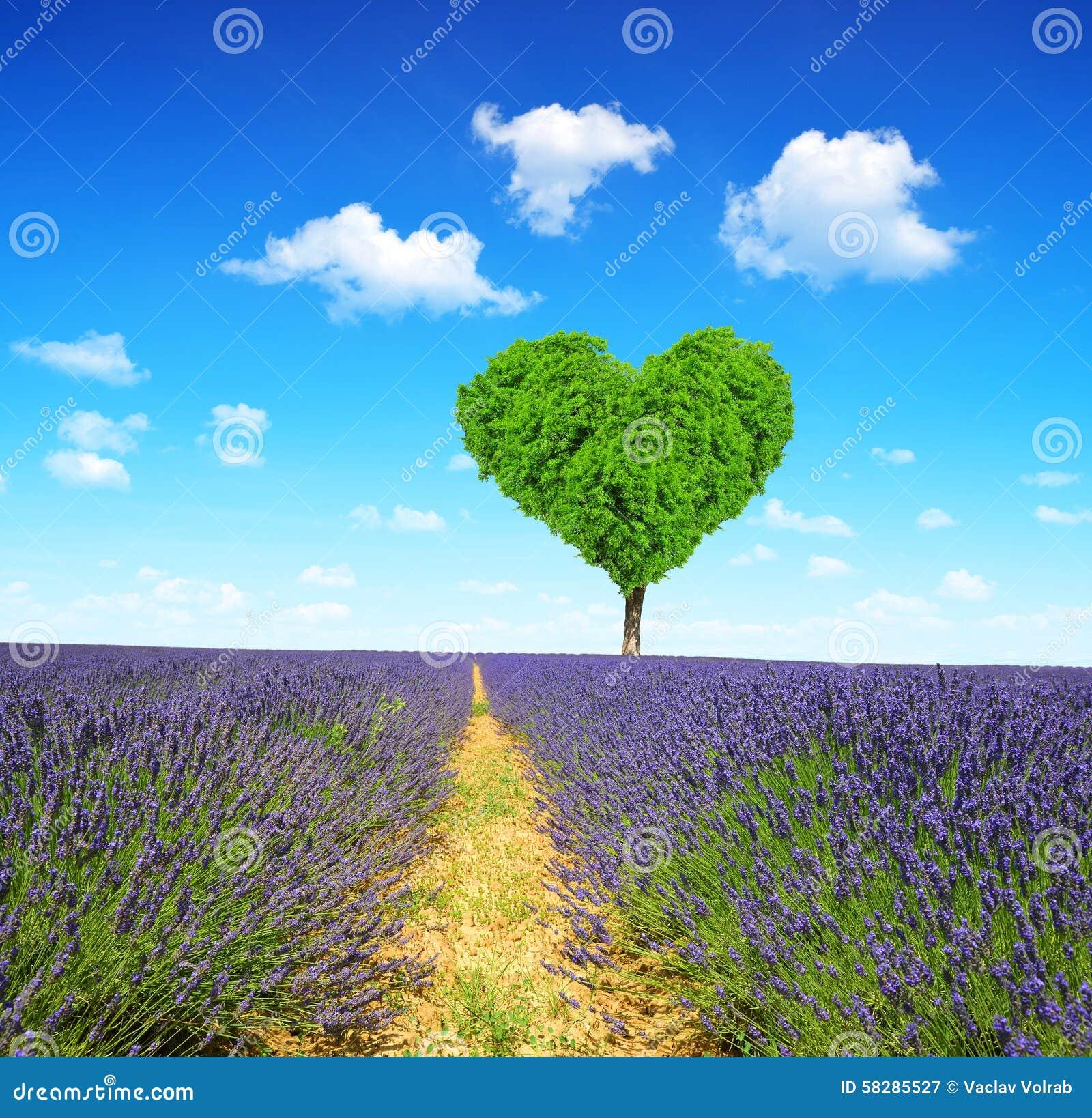 Het gebied van de lavendel