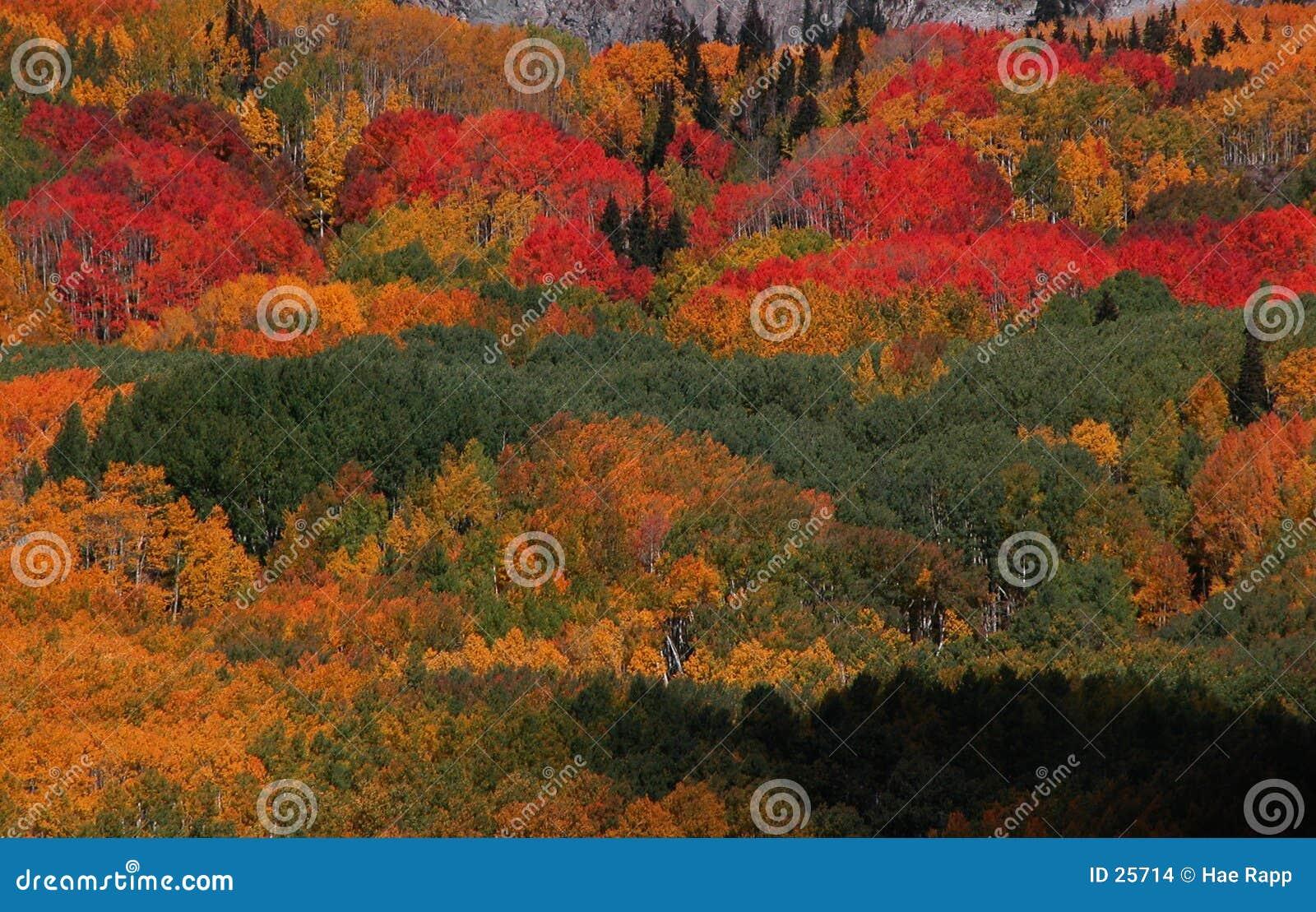 Download Het Gebladerte Van De Daling Stock Foto - Afbeelding bestaande uit kleur, bomen: 25714