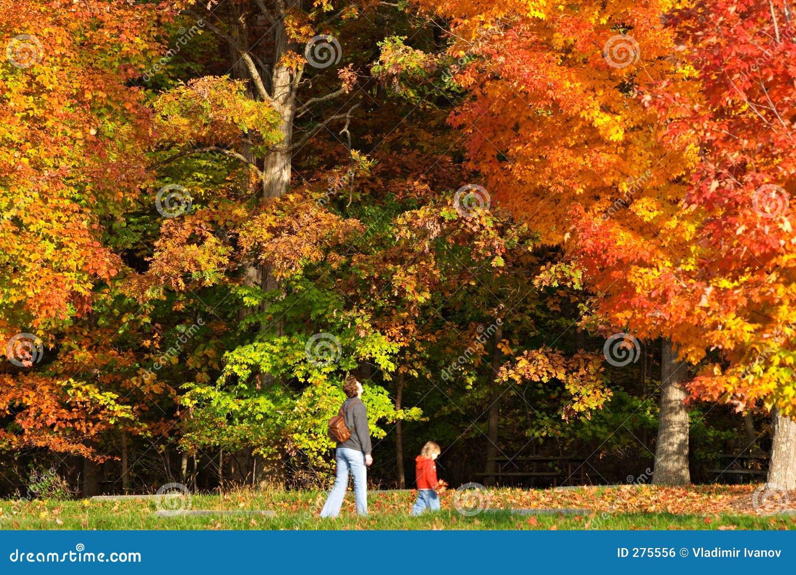 Het gebladerte van de herfst