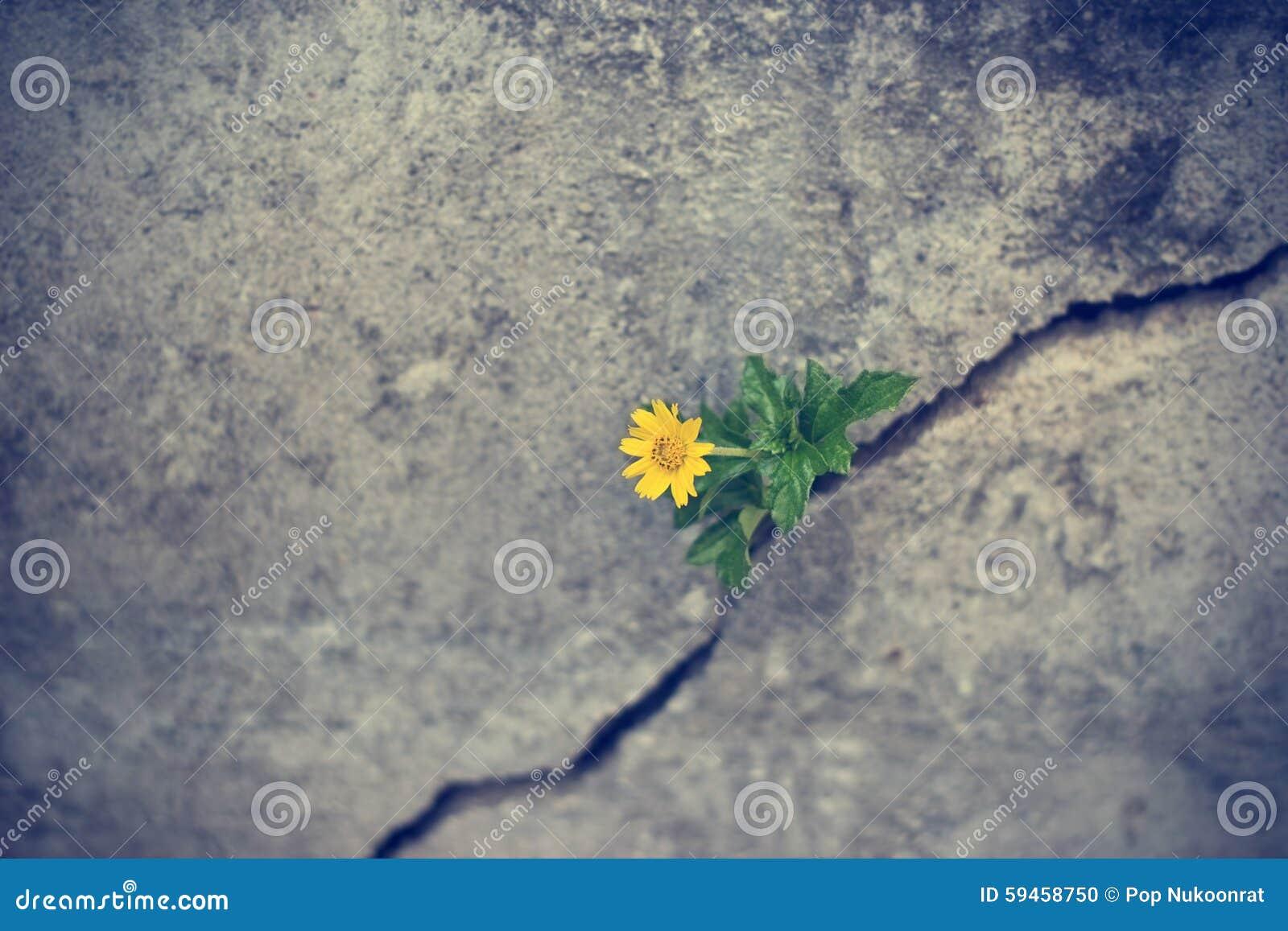 Het gele bloem groeien op barst grunge muur