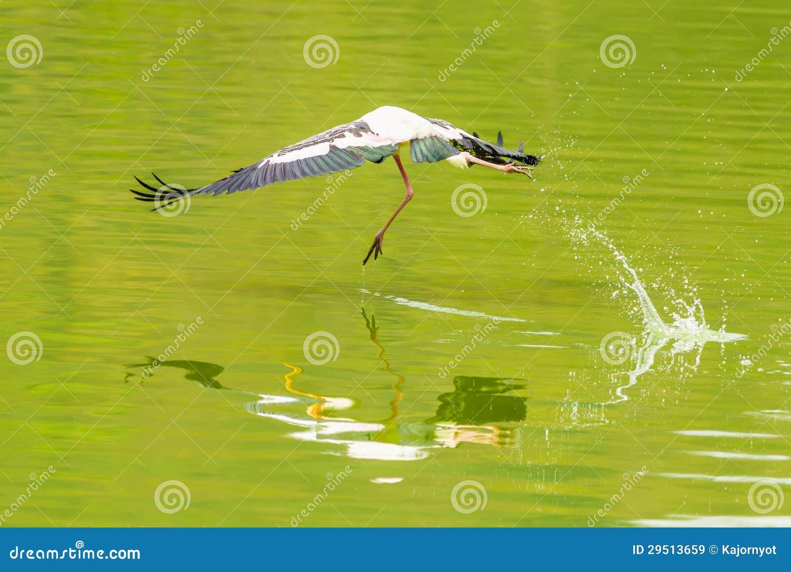 Het Geschilderde de vogel van de Ooievaar vliegen