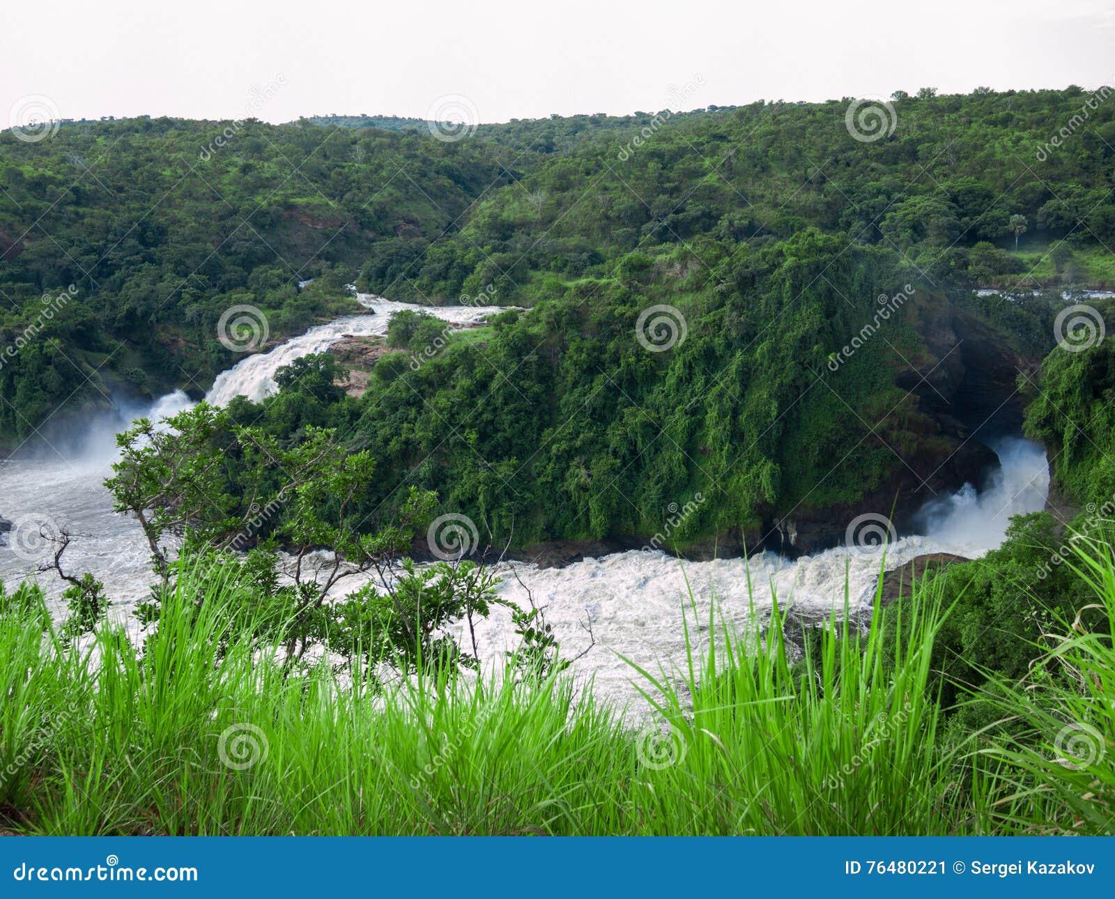 Het gestemde beeld van majestueuze waterval in het park Murchison valt in Oeganda tegen de achtergrond van de wildernis