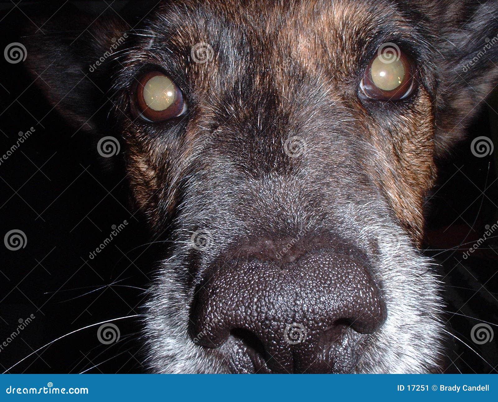 Het gezichtsclose-up van de hond
