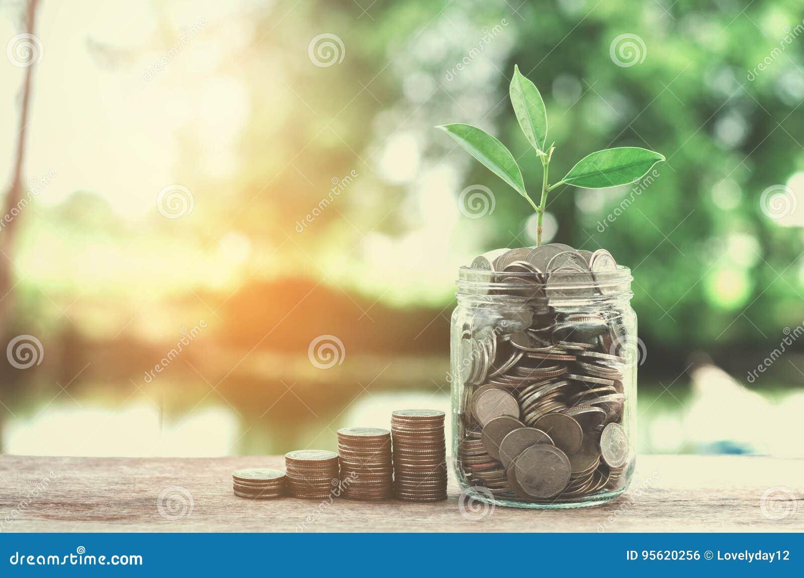 Het glas van het bedrijfsconceptengeld en growht kleine boom