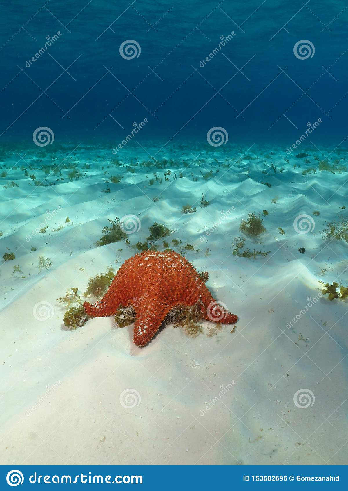 Het glasheldere water en de zeester wensen dit