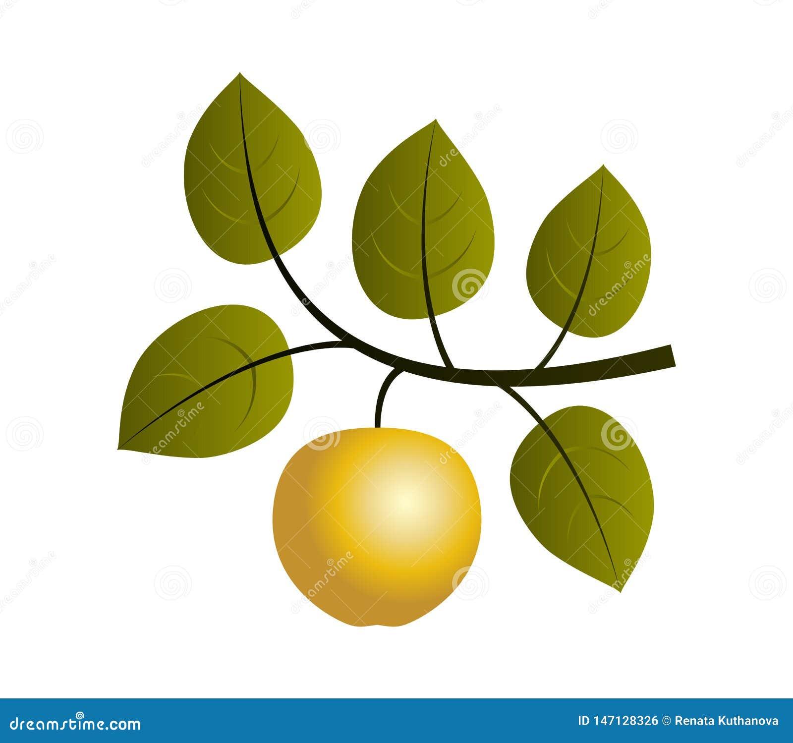 Het gouden takje van de appelboom