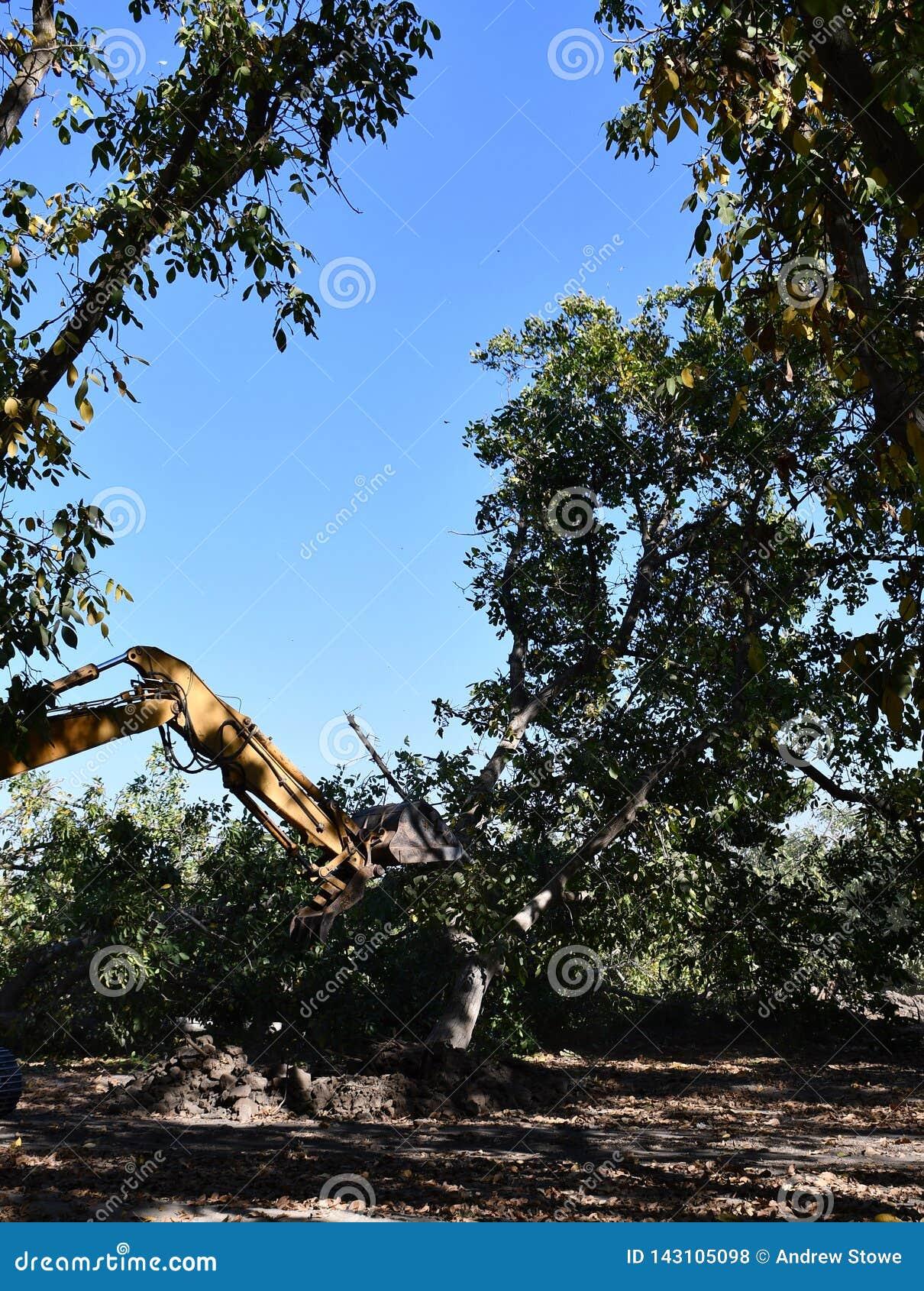 Het graafwerktuig dat wordt gebruikt werd om boom-stompen en wortels na het bos bloot te leggen verwijderd