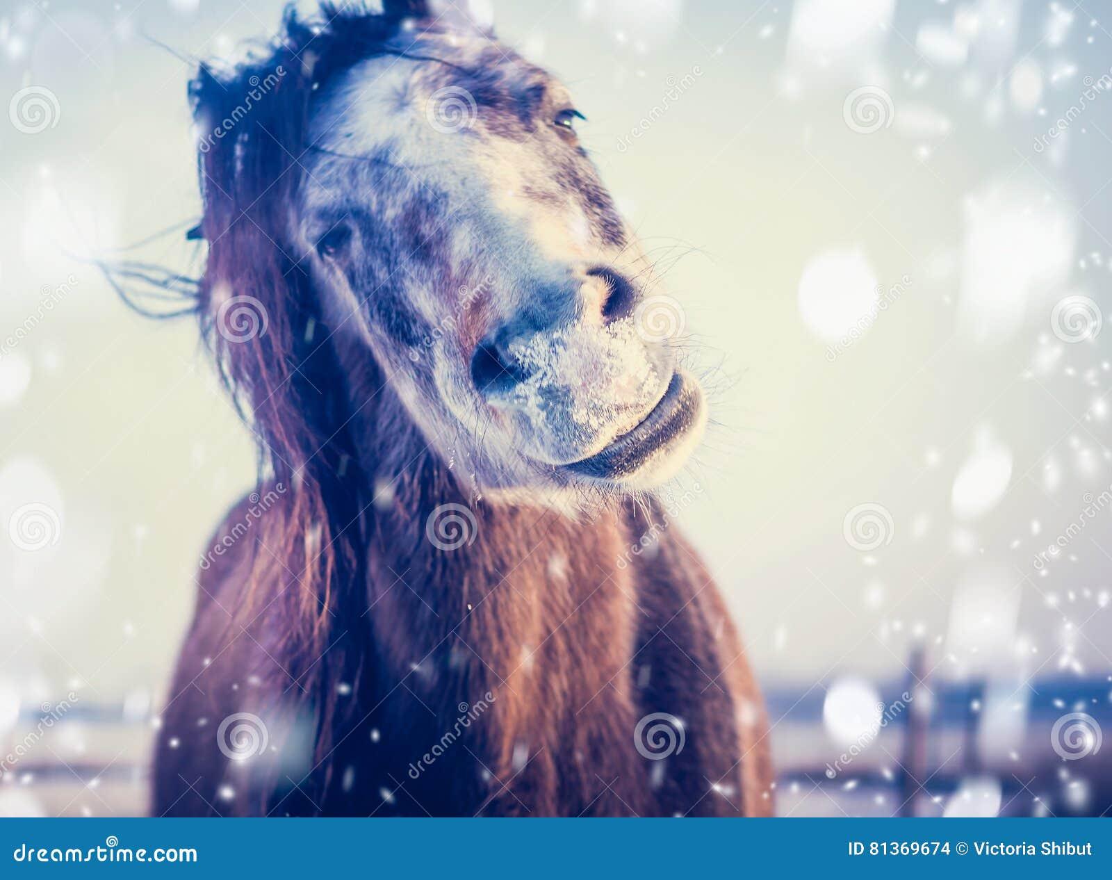 Het grappige Paard geniet van de winter en de sneeuw, sluit omhoog