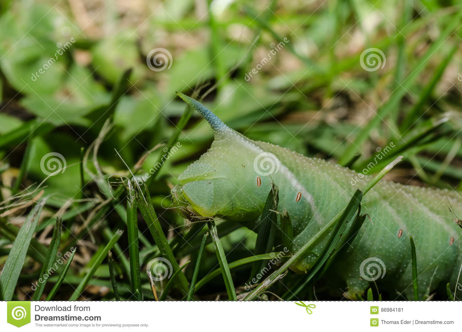 Het groene rupsband eten