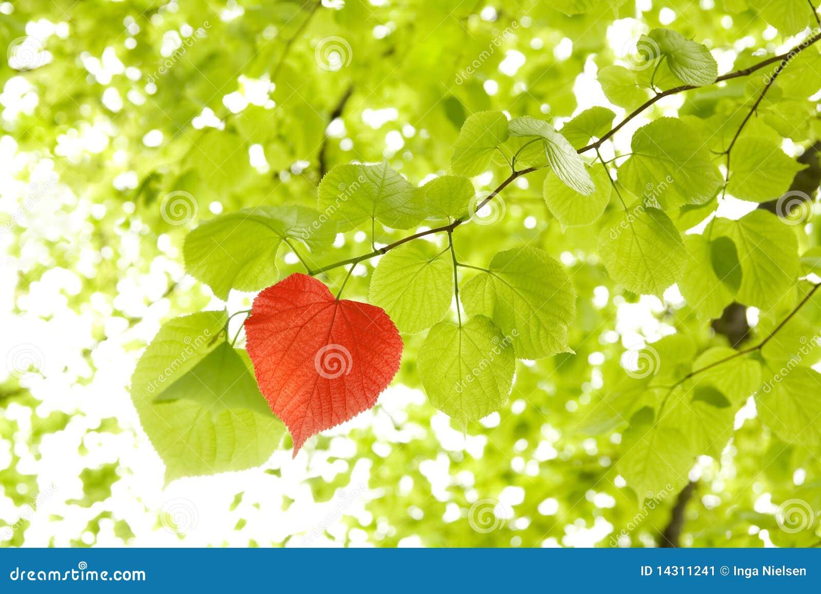 Het hart van het blad